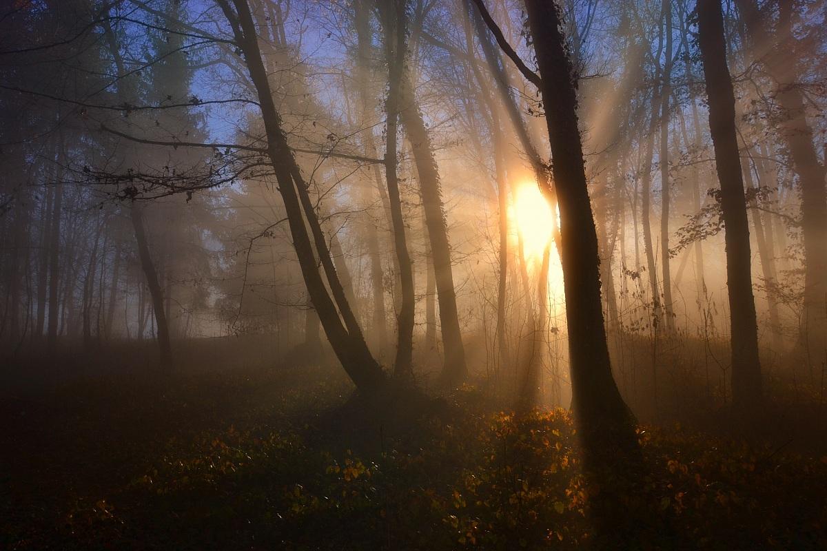 Light between the hornbeams...