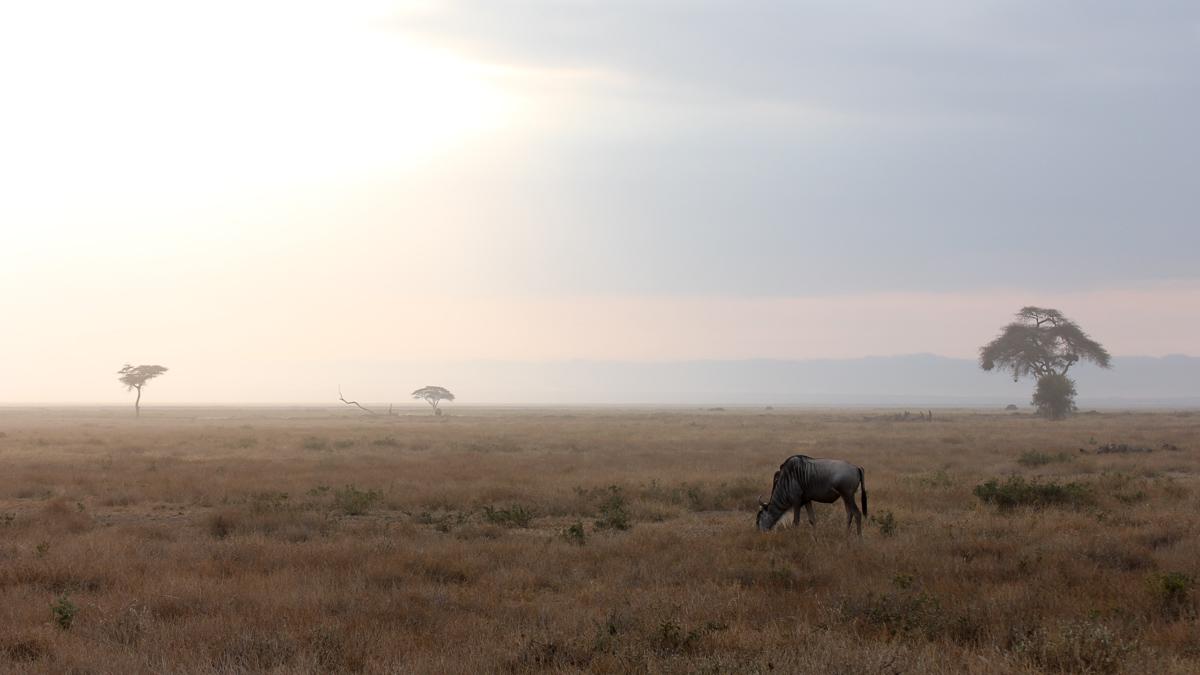 Dawn in the savannah...