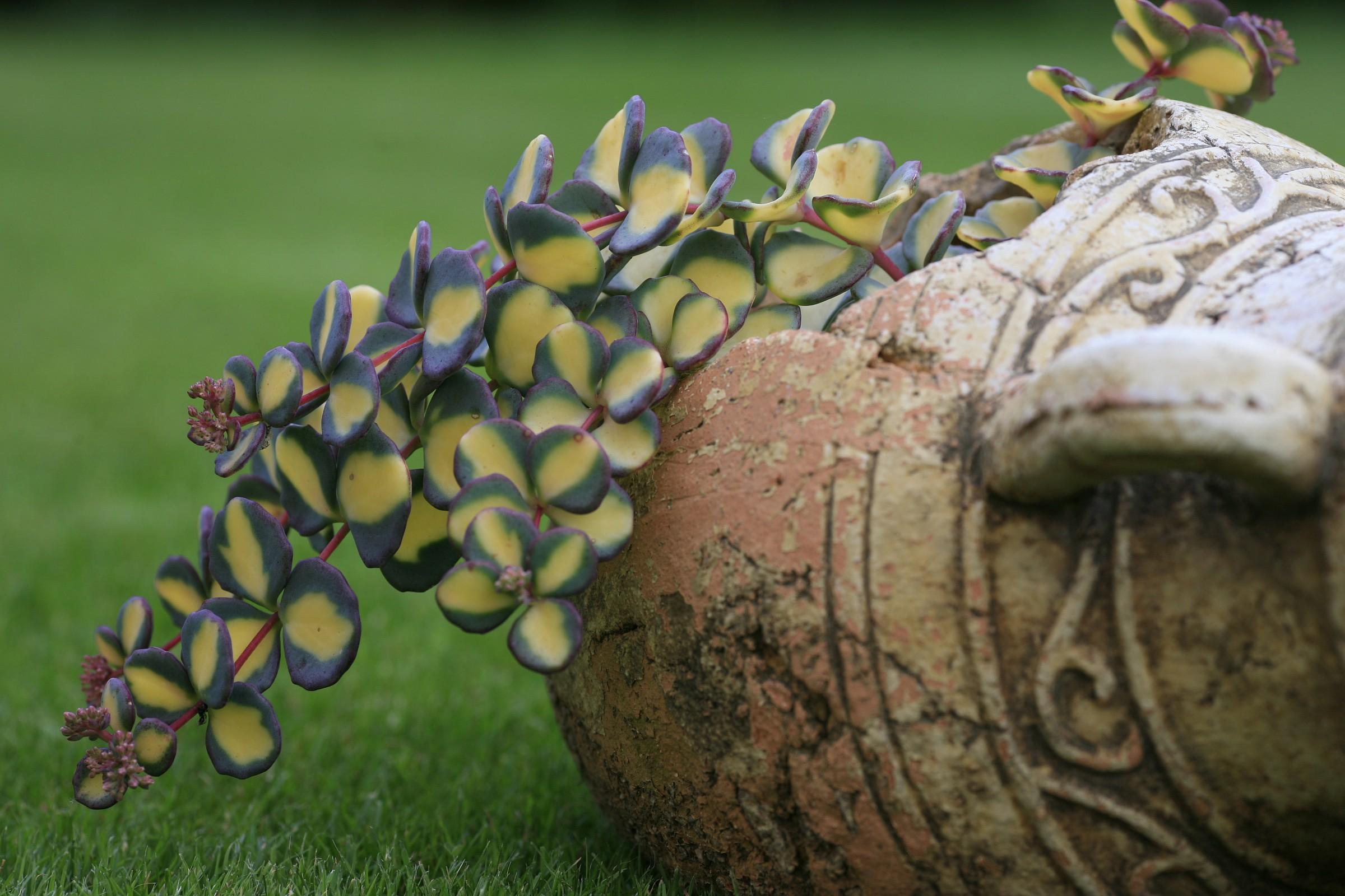 ornamental plant...