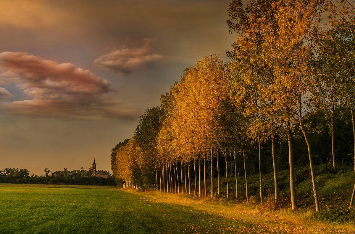 Yellow autumn...