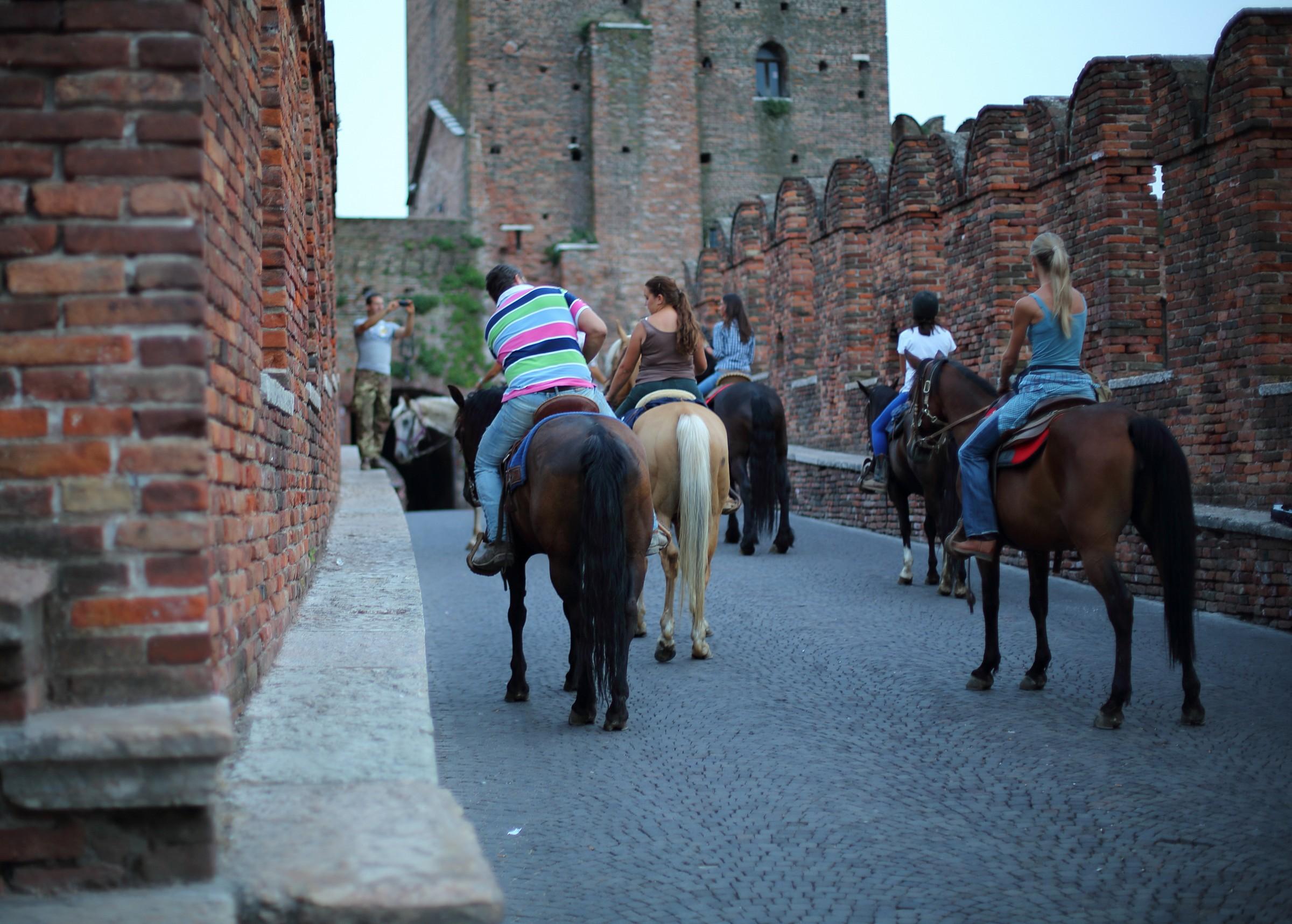 Cavalli a Ponte Vecchio VR...
