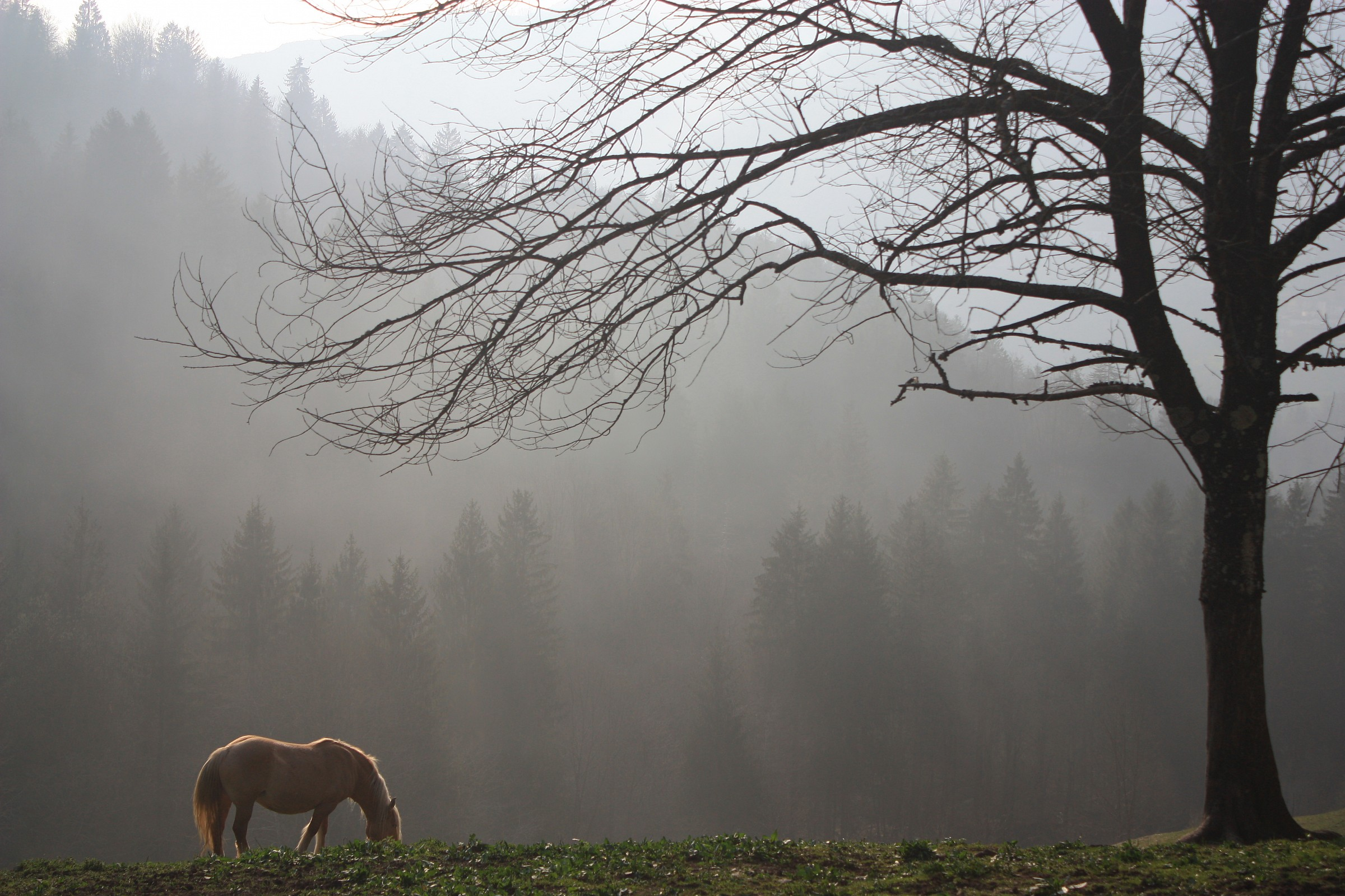 secluded pasture...