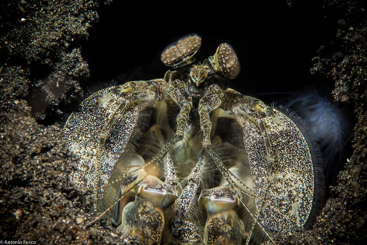 Mantis Shrimp...