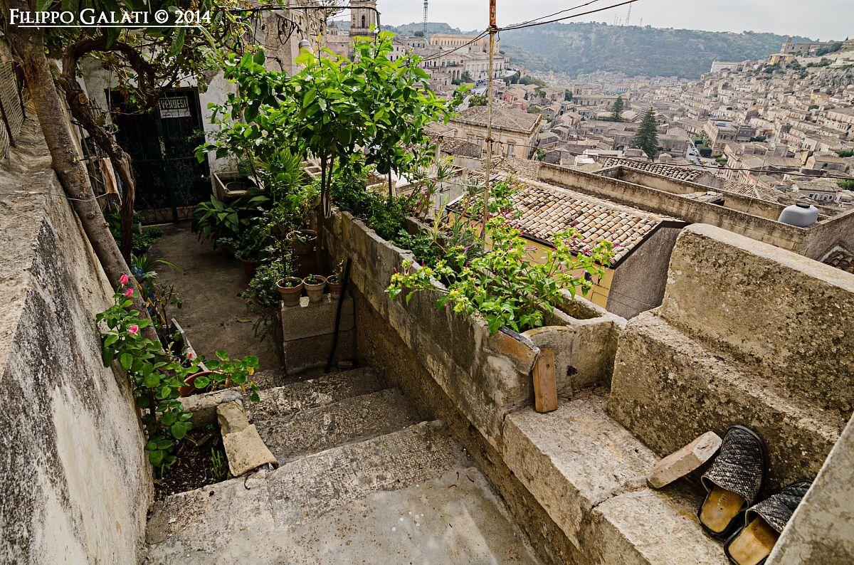 Urban garden...