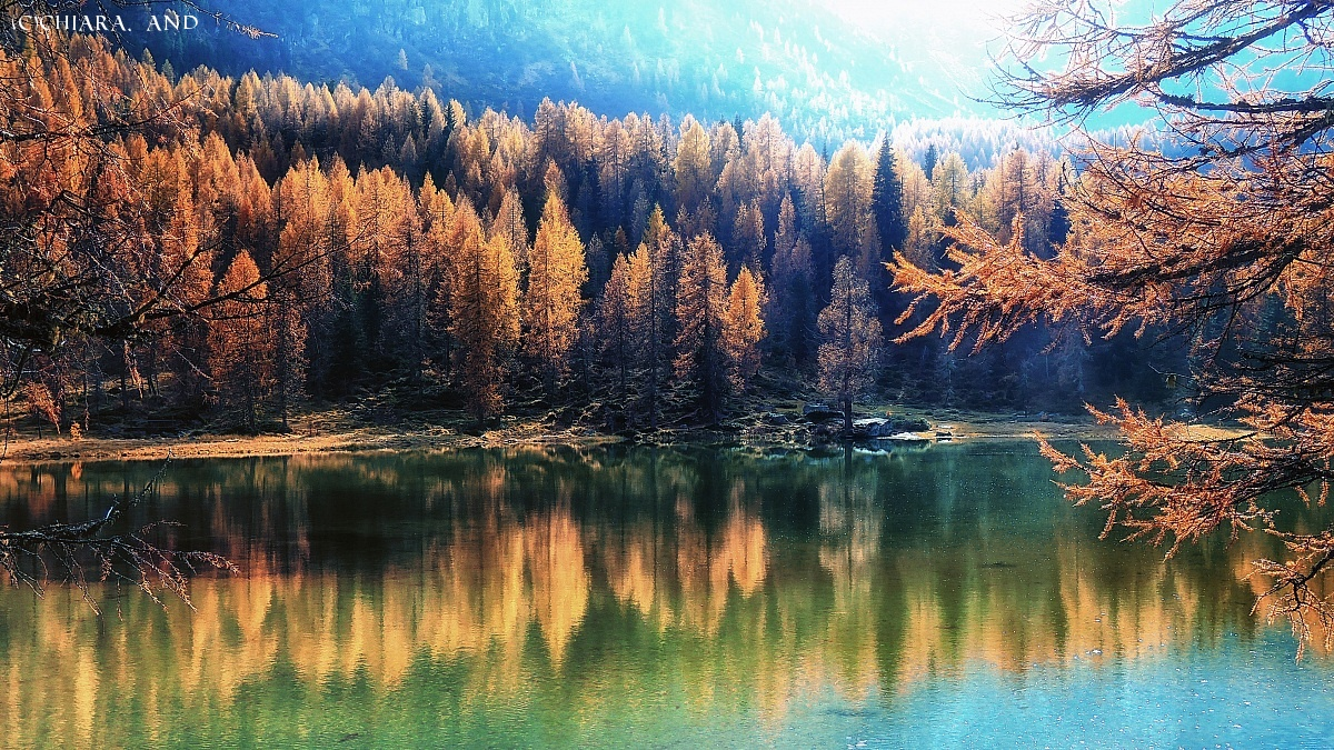 Among the larches in flames ........