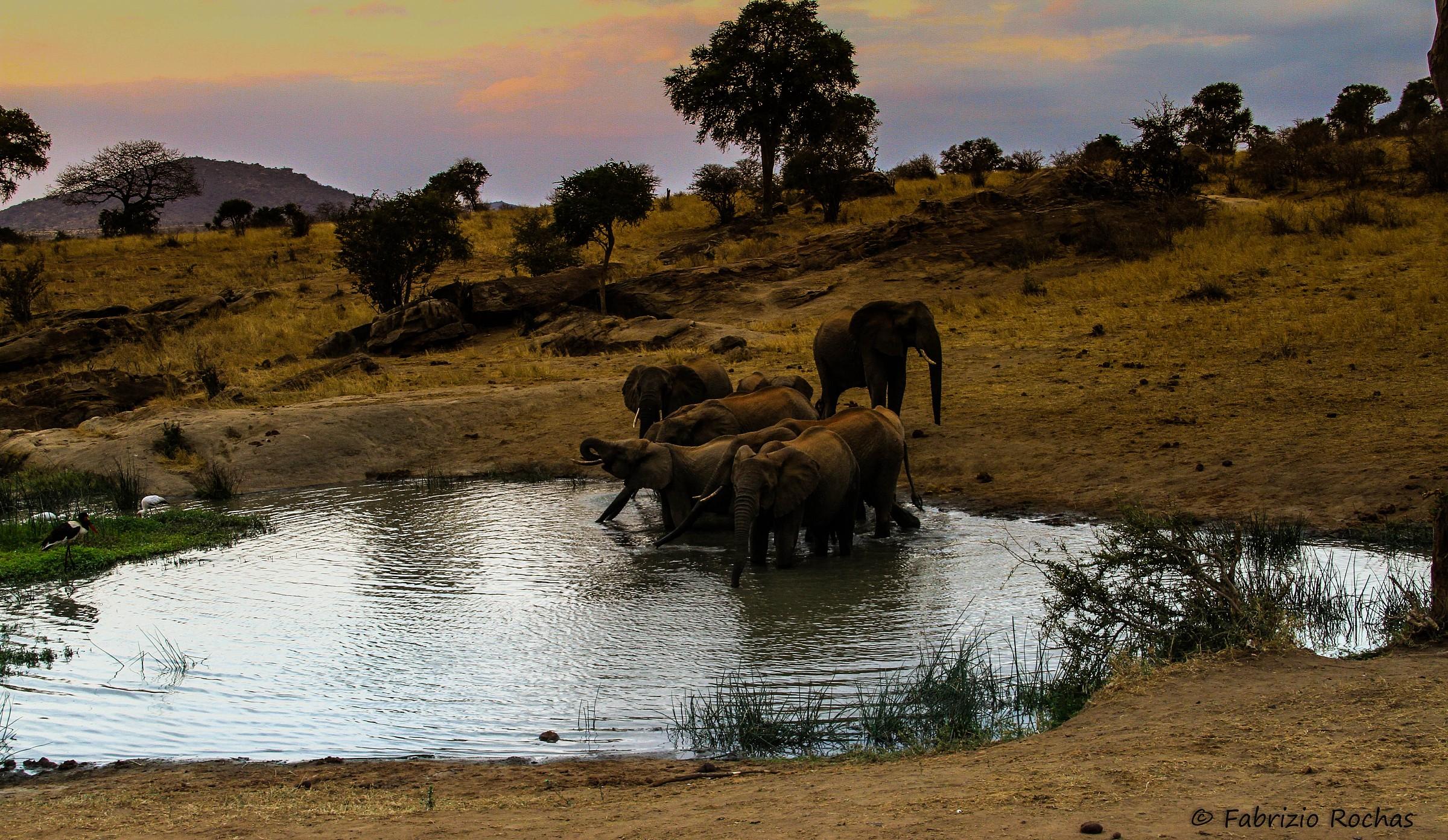 Watering evening...