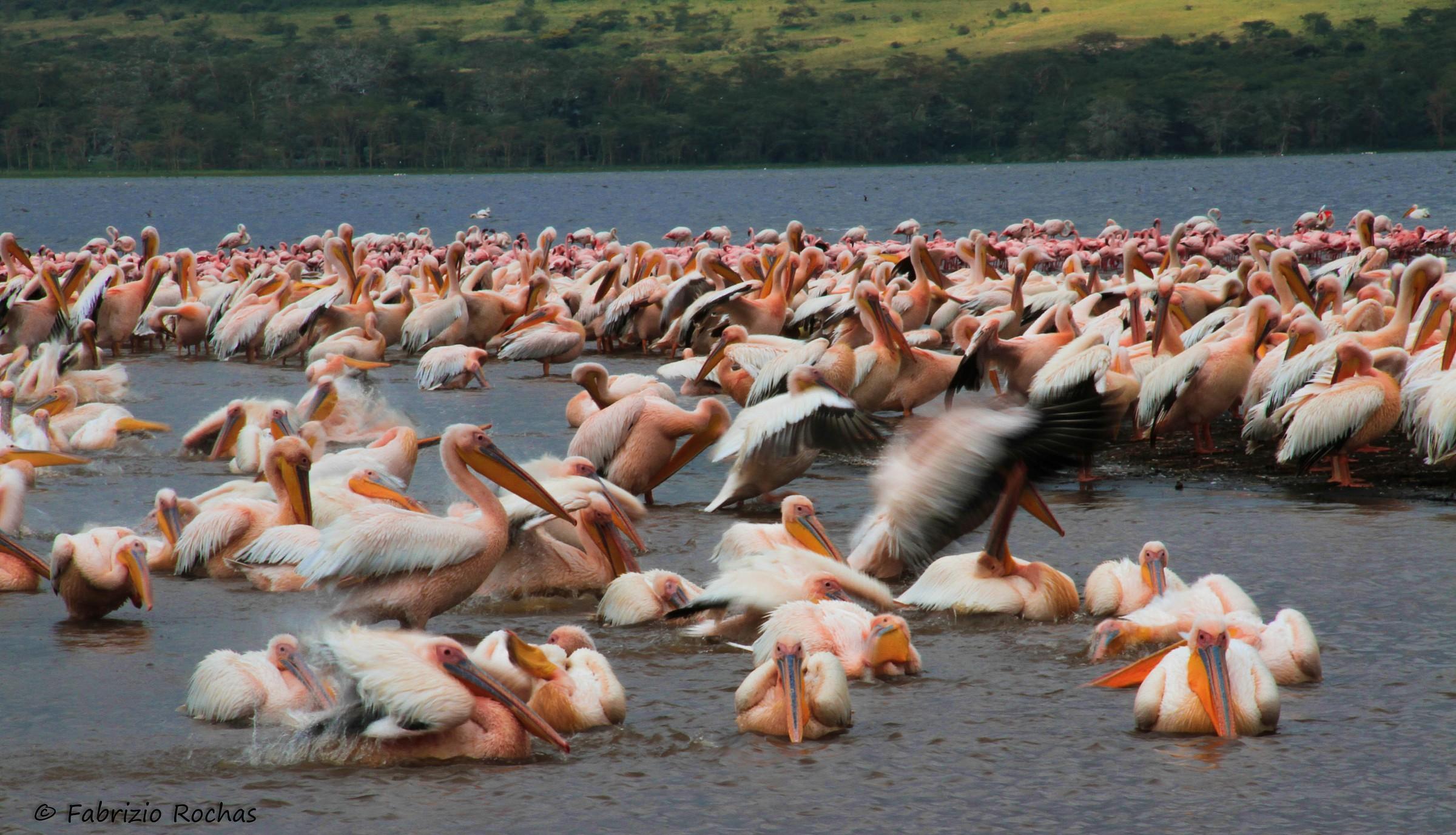 Lake Nakuru...