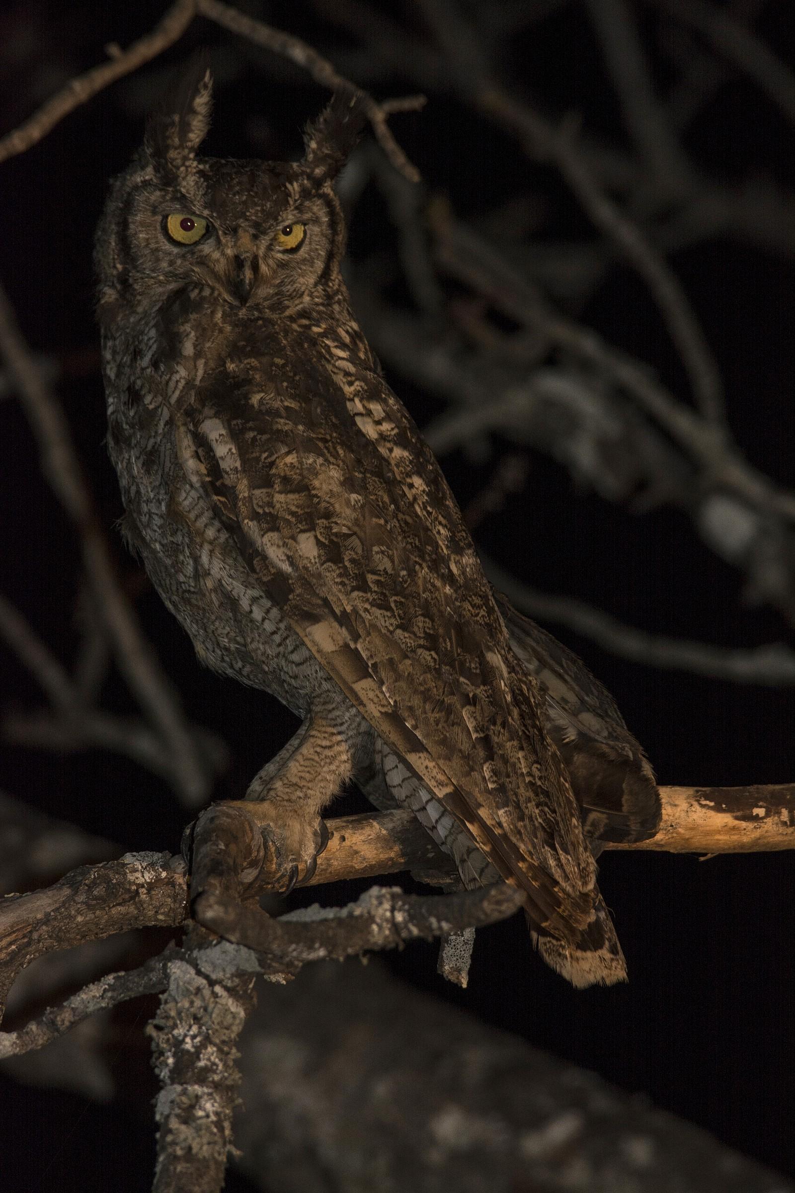 Night Safari...