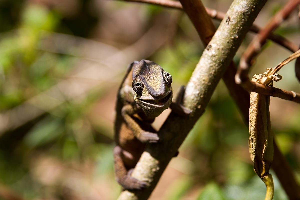 Chameleon smiling...