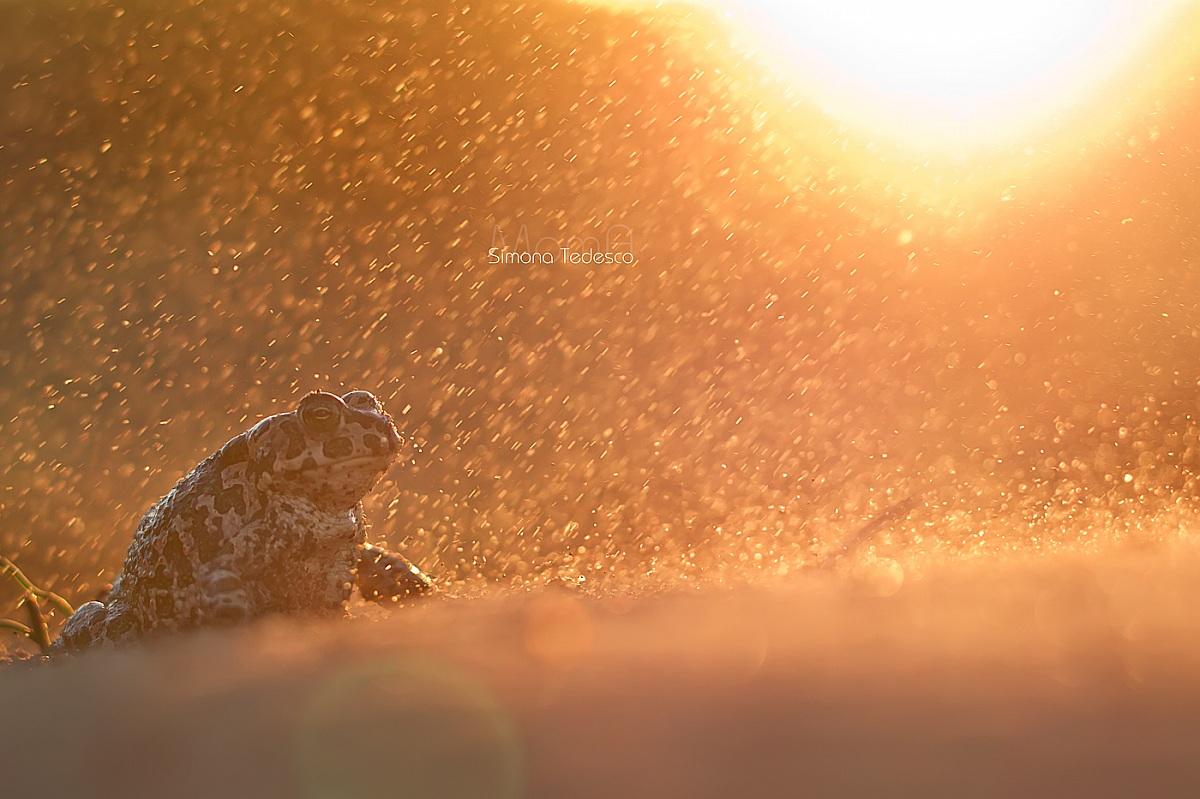 Sandstorm...