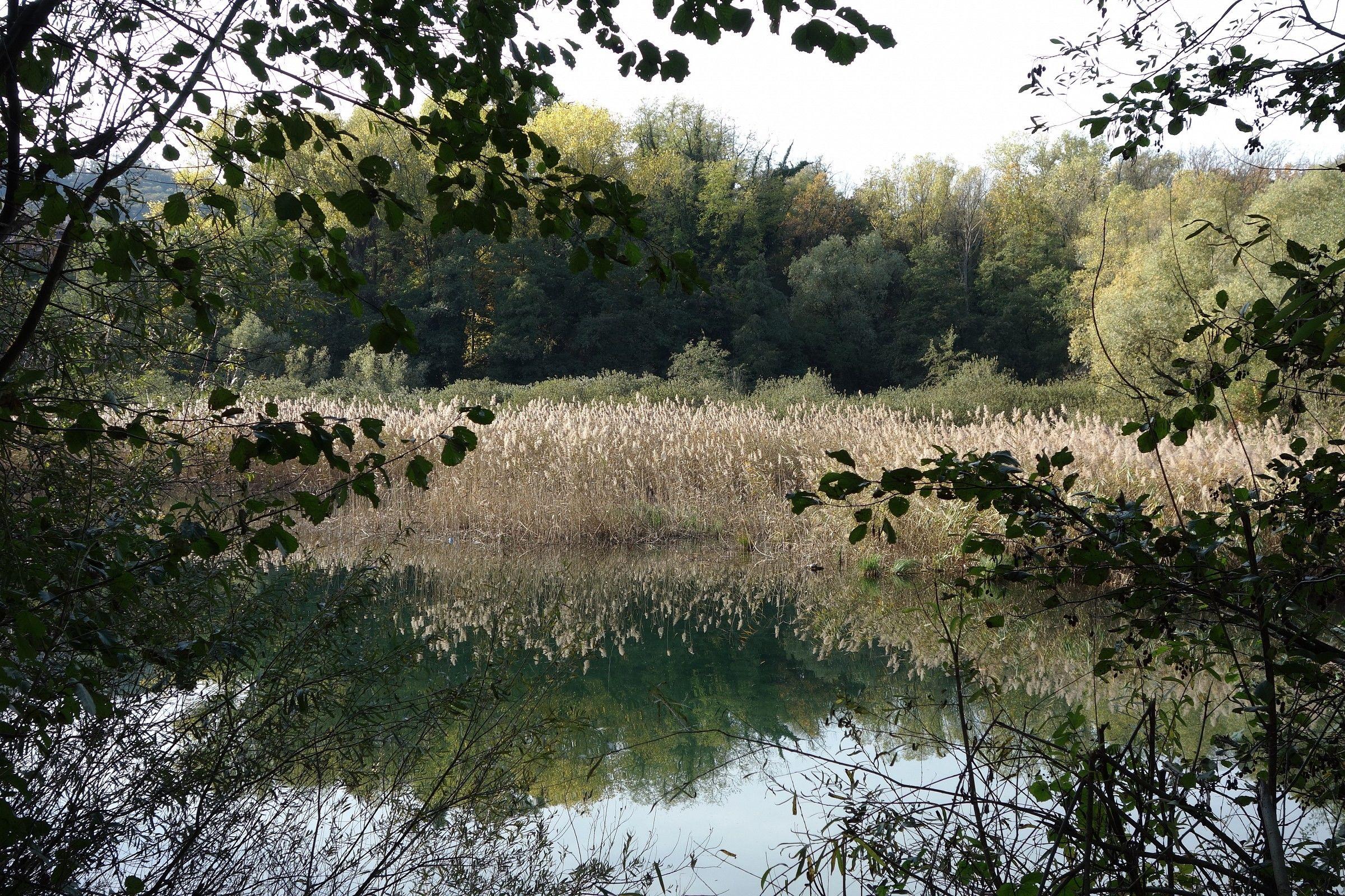 Adda, riflessi di canne in autunno...