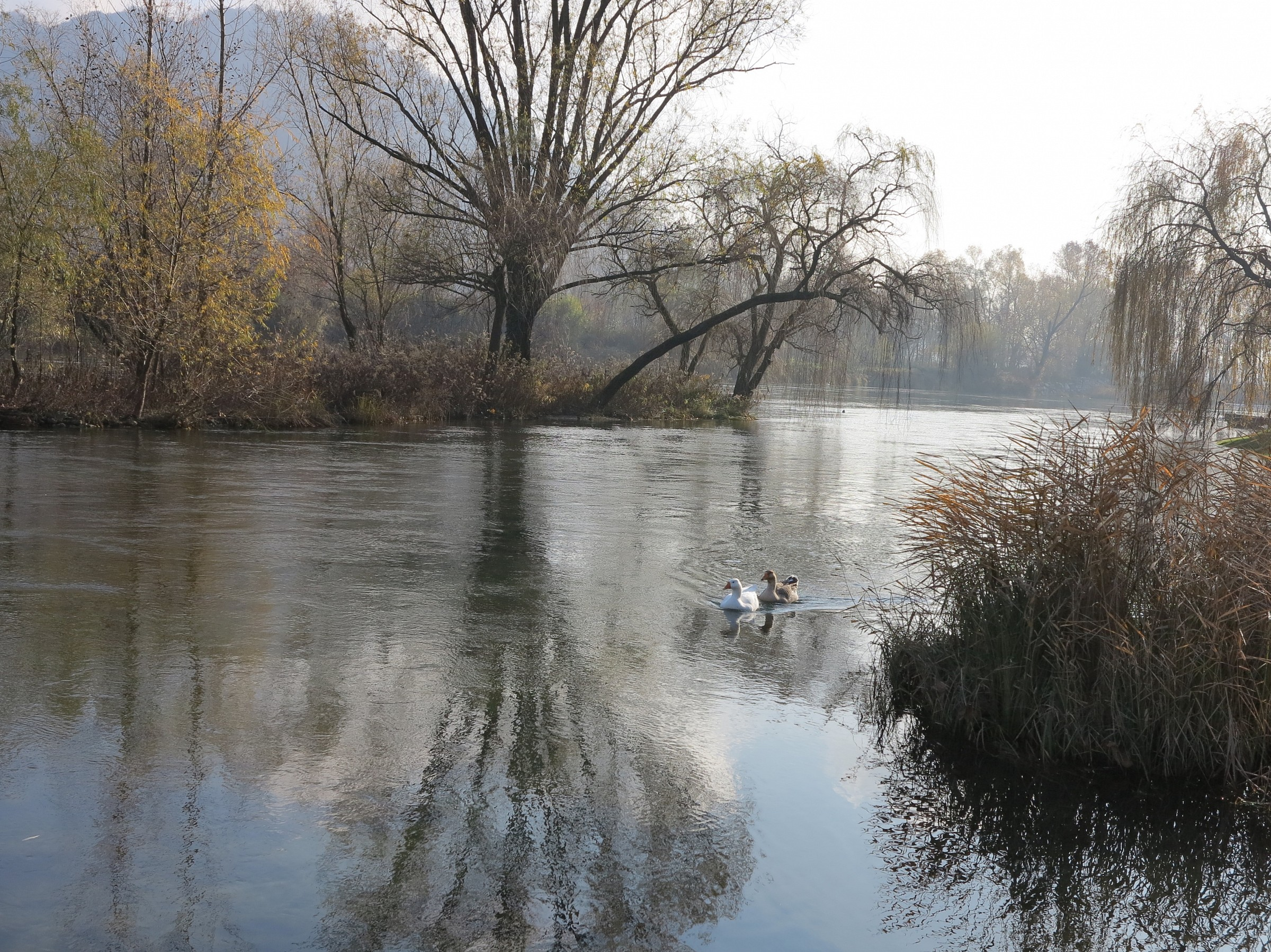 Adda, autunno presso l'isolotto di Brivio...