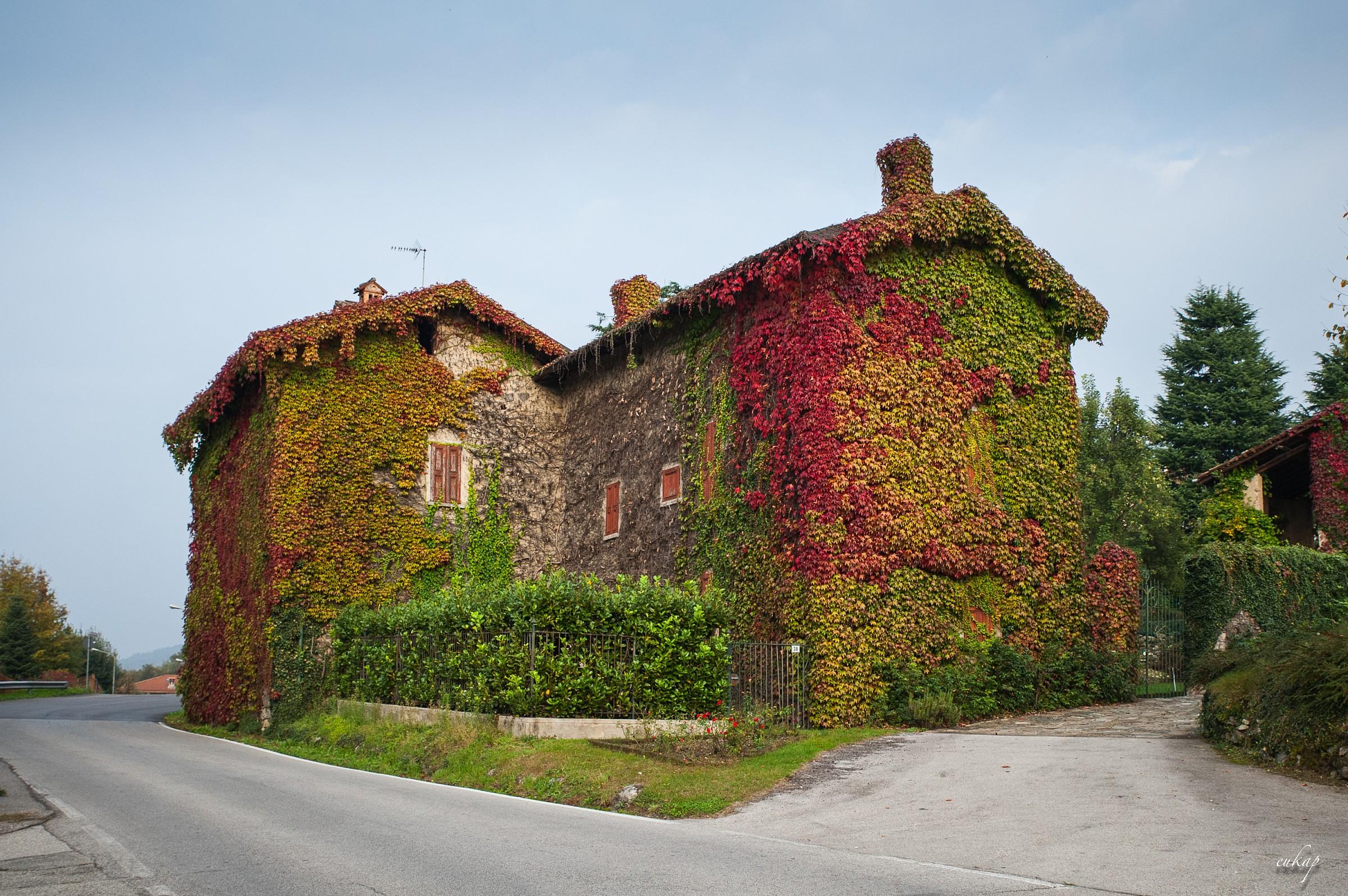 la casa dell'edera...
