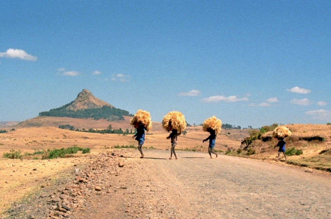 carriers of straw...