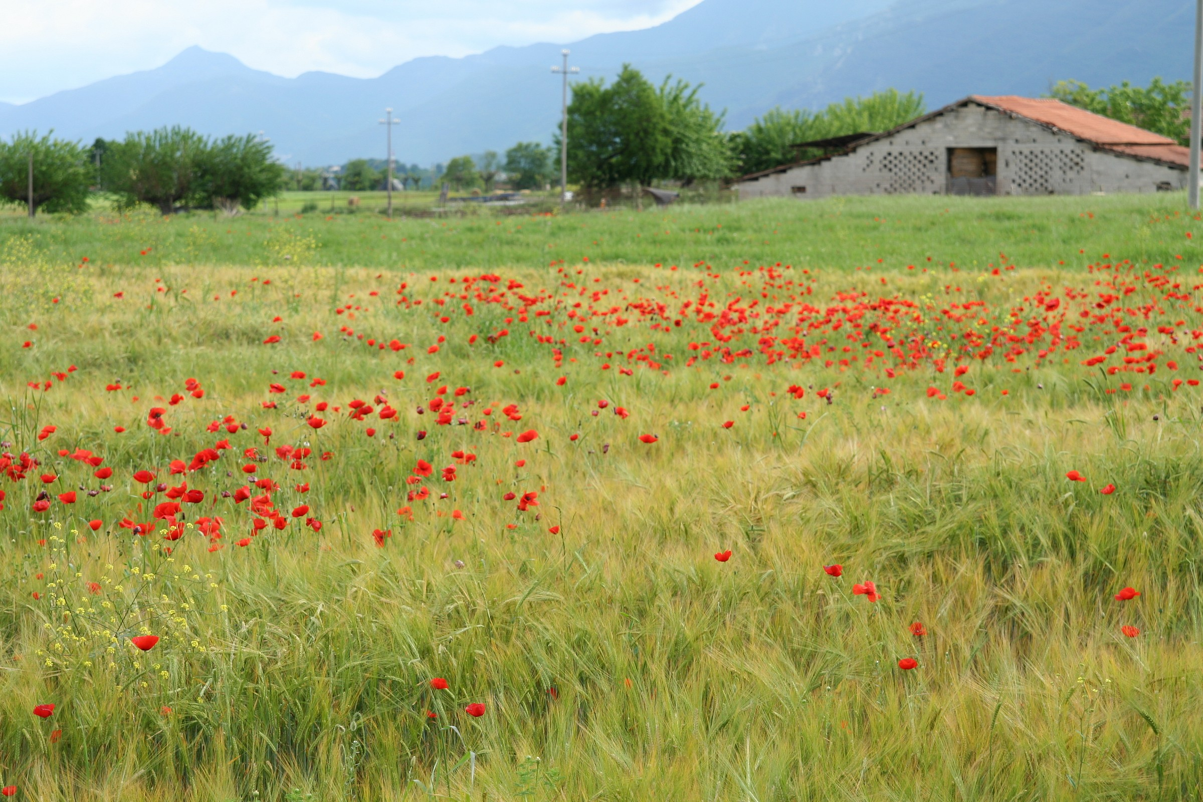 Flower meadows...