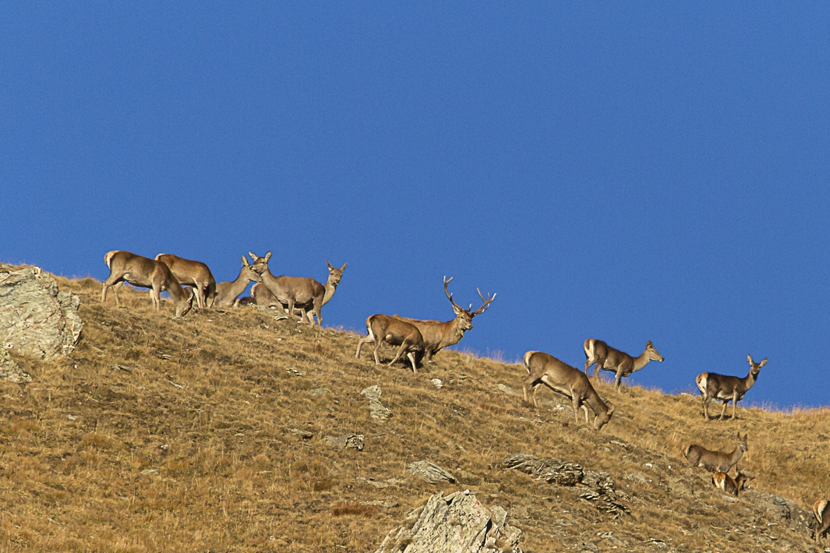 recent grazing at high altitude...