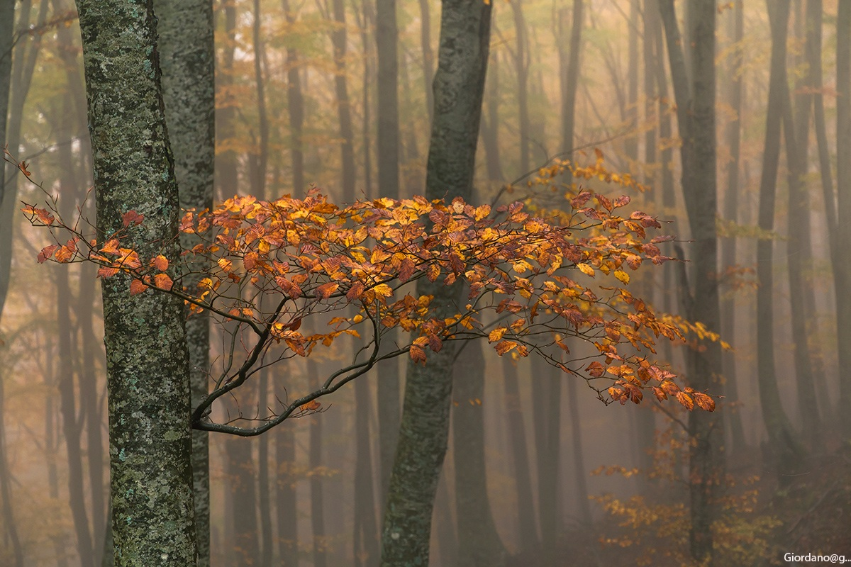 Autumn in the beech forest...