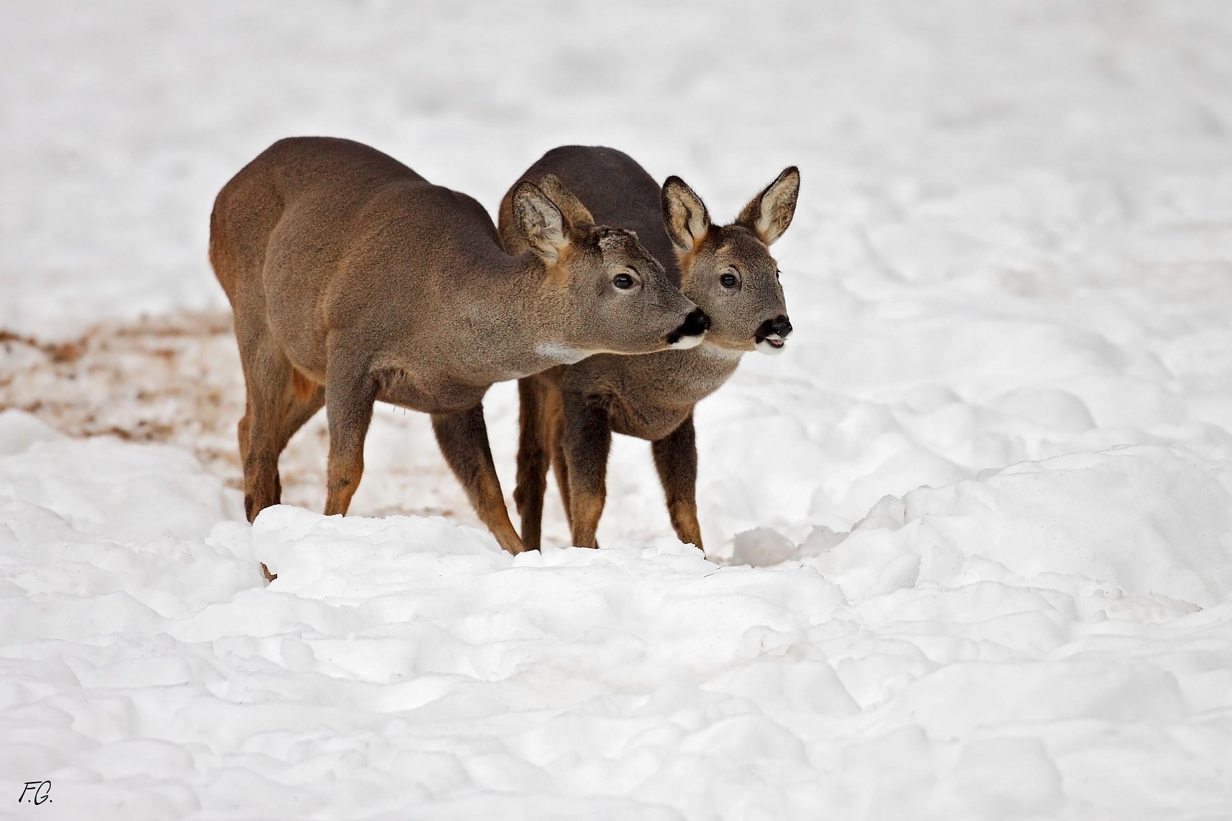 2 deer...