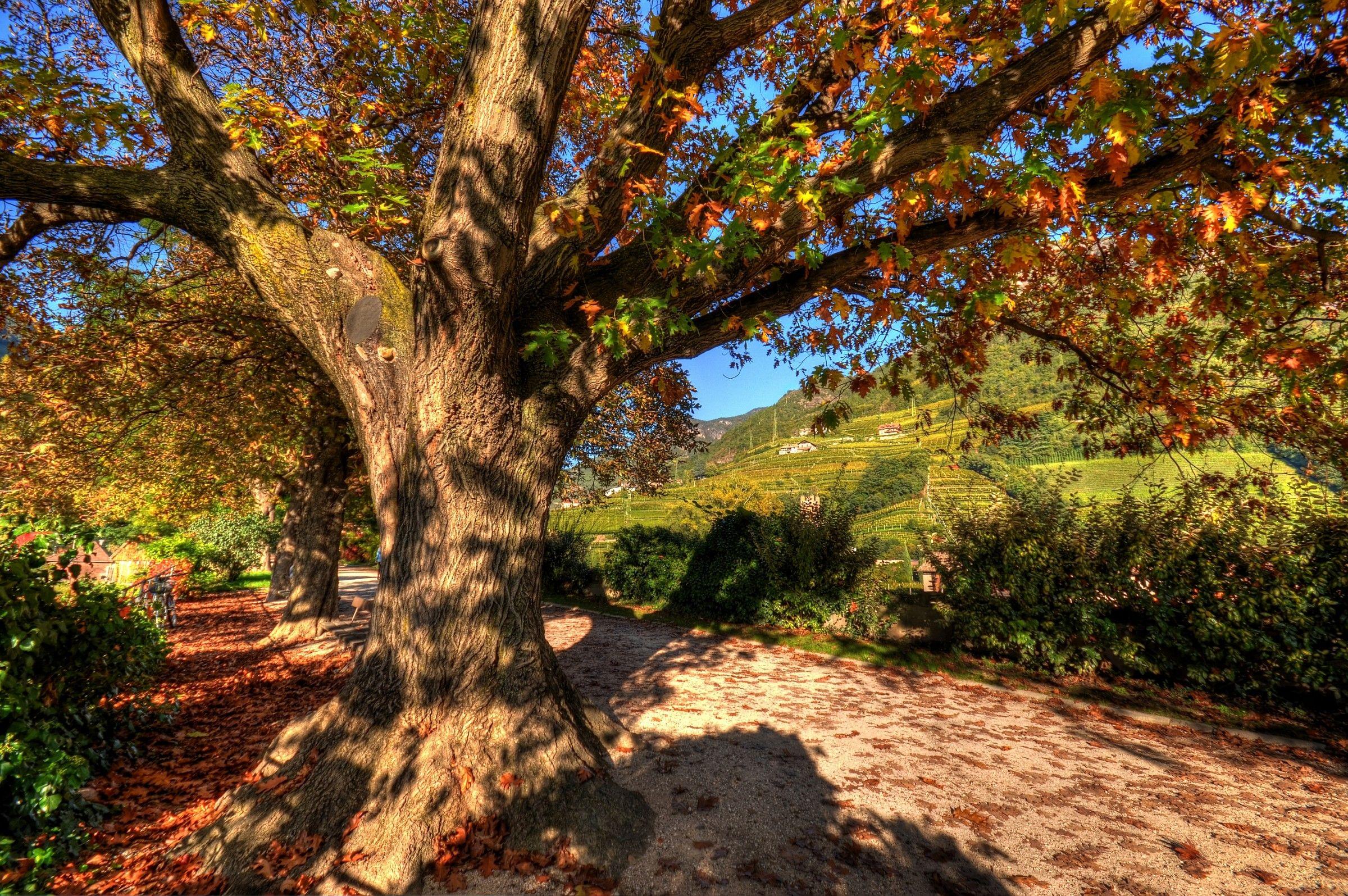Autumn_02...