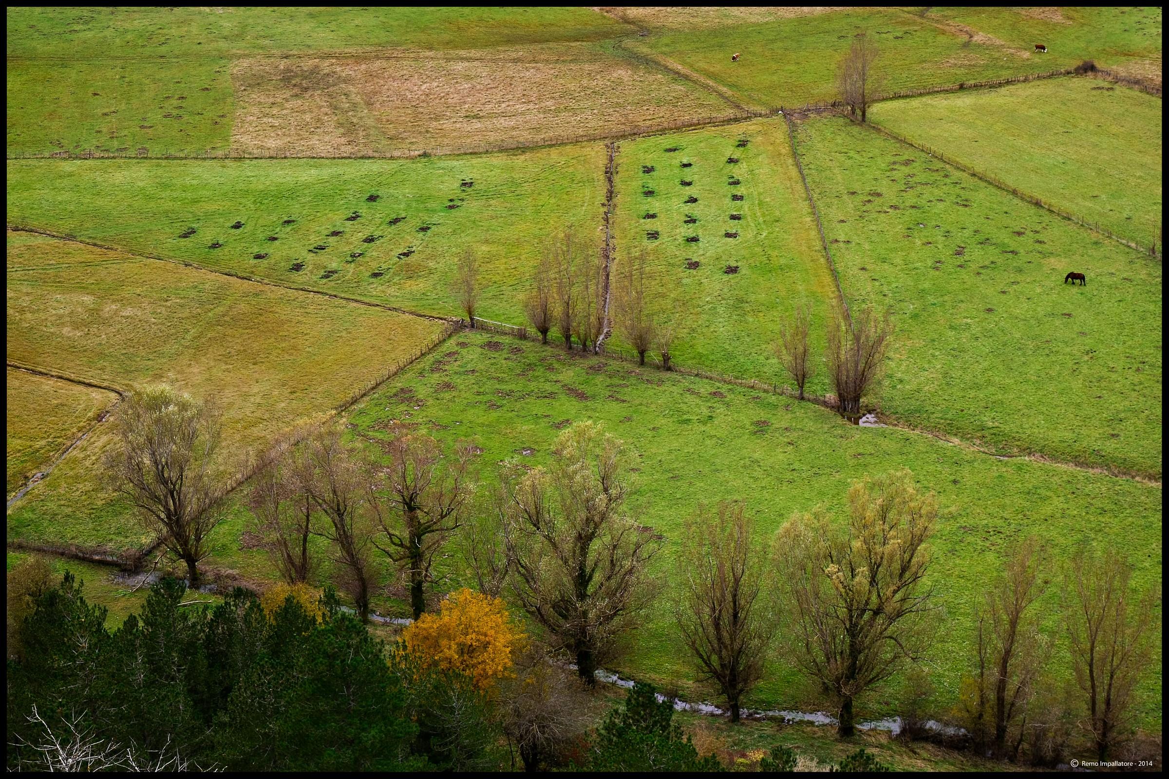 Pastures...