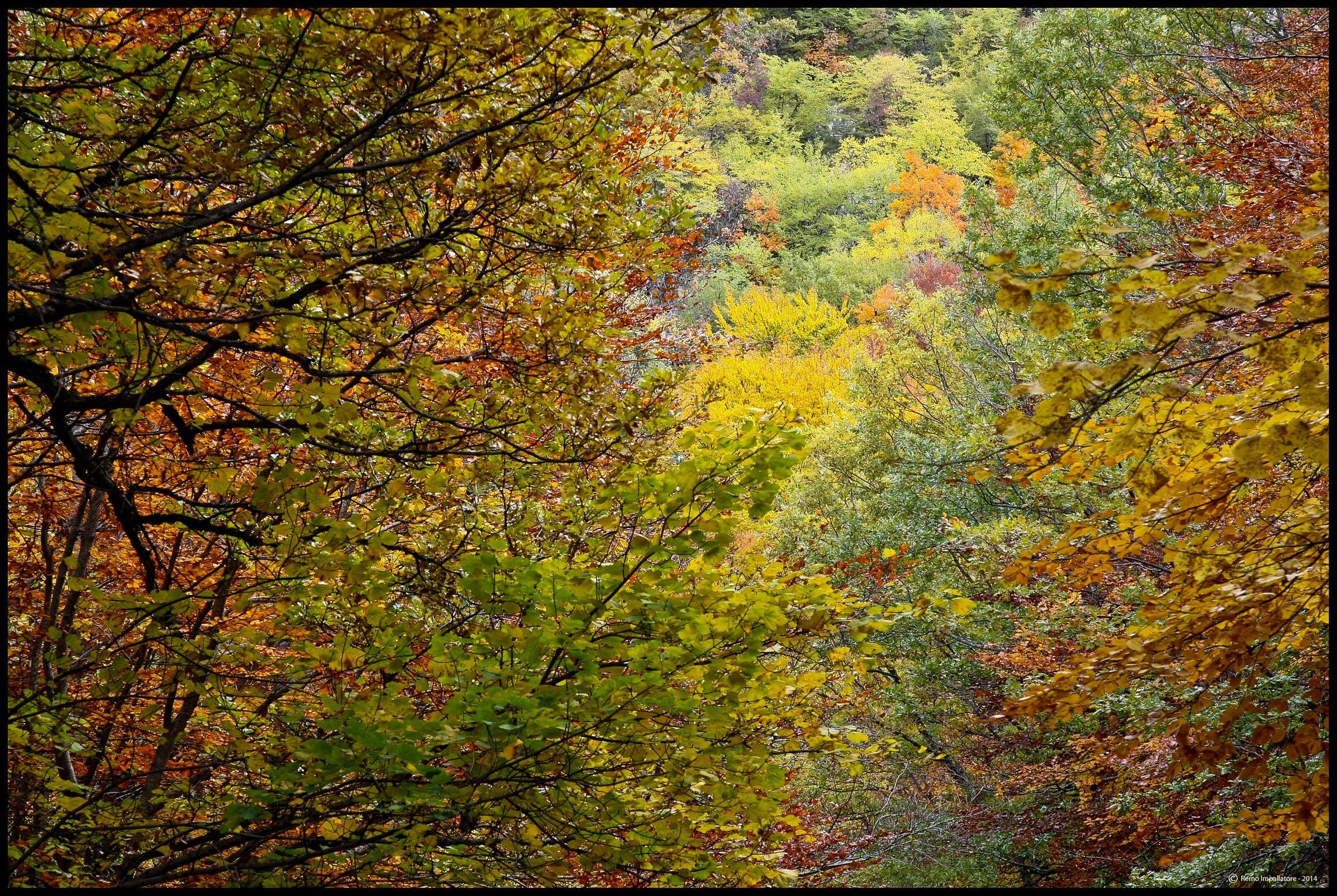 "Paints of autumn, Author: ""Mother Nature""..."