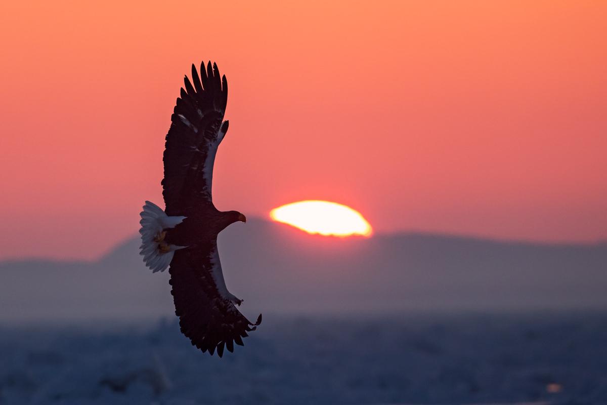 steller at dawn...
