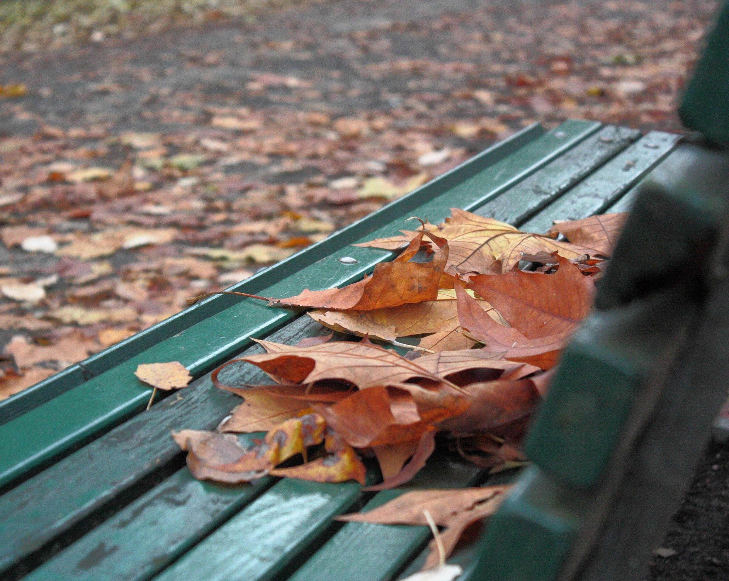 Yesterday I saw the fall .... sitting on a bench...