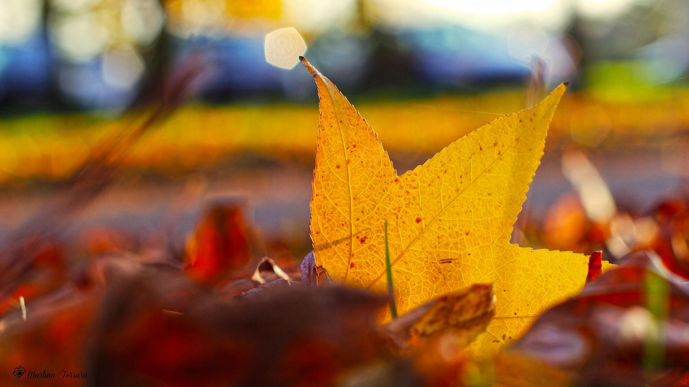 Fall Time...