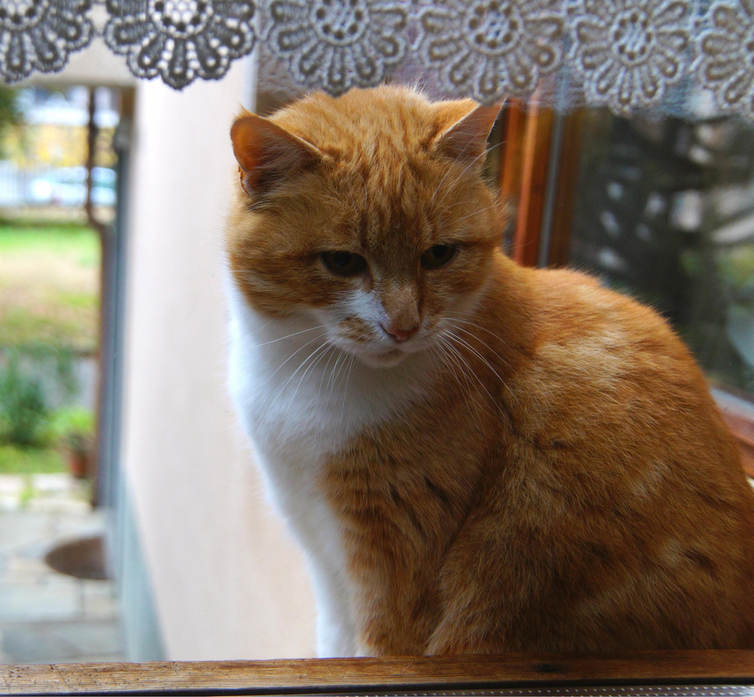 Pioveee! Someone opens the window ??...