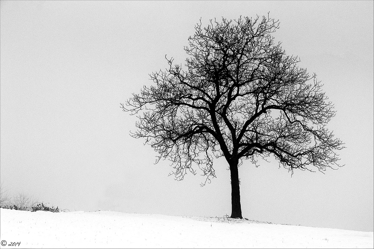 He is the tree, she is the fog...