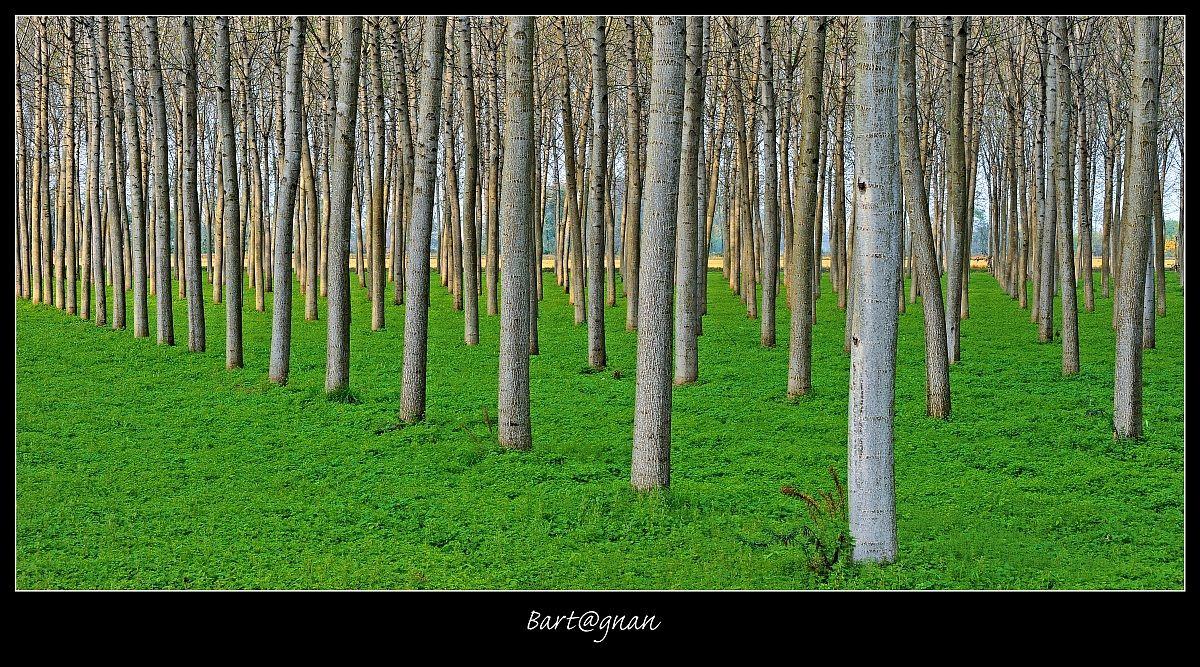 Trees 2...