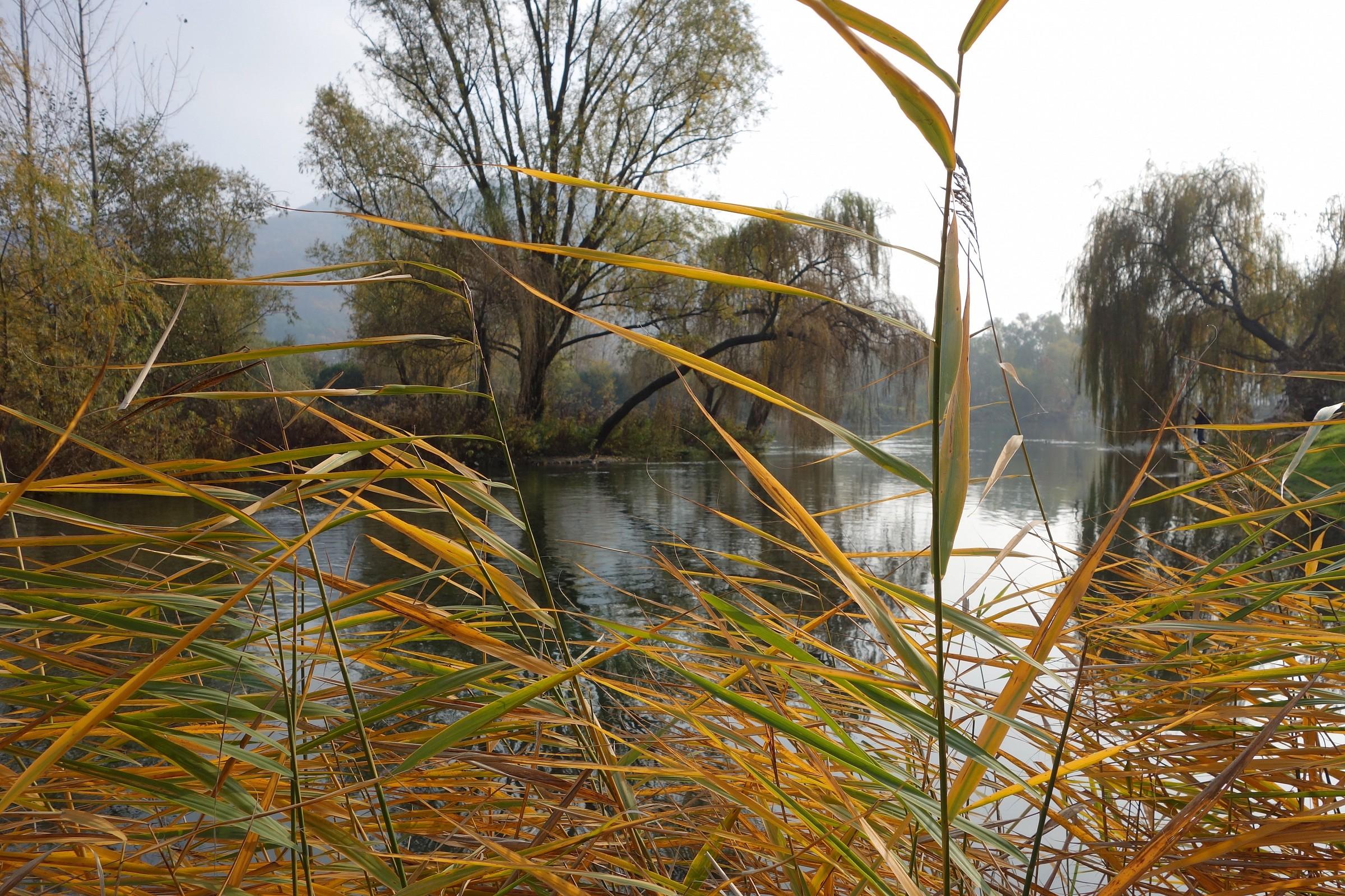 Adda, colori d'autunno presso l'isolotto di Brivio...