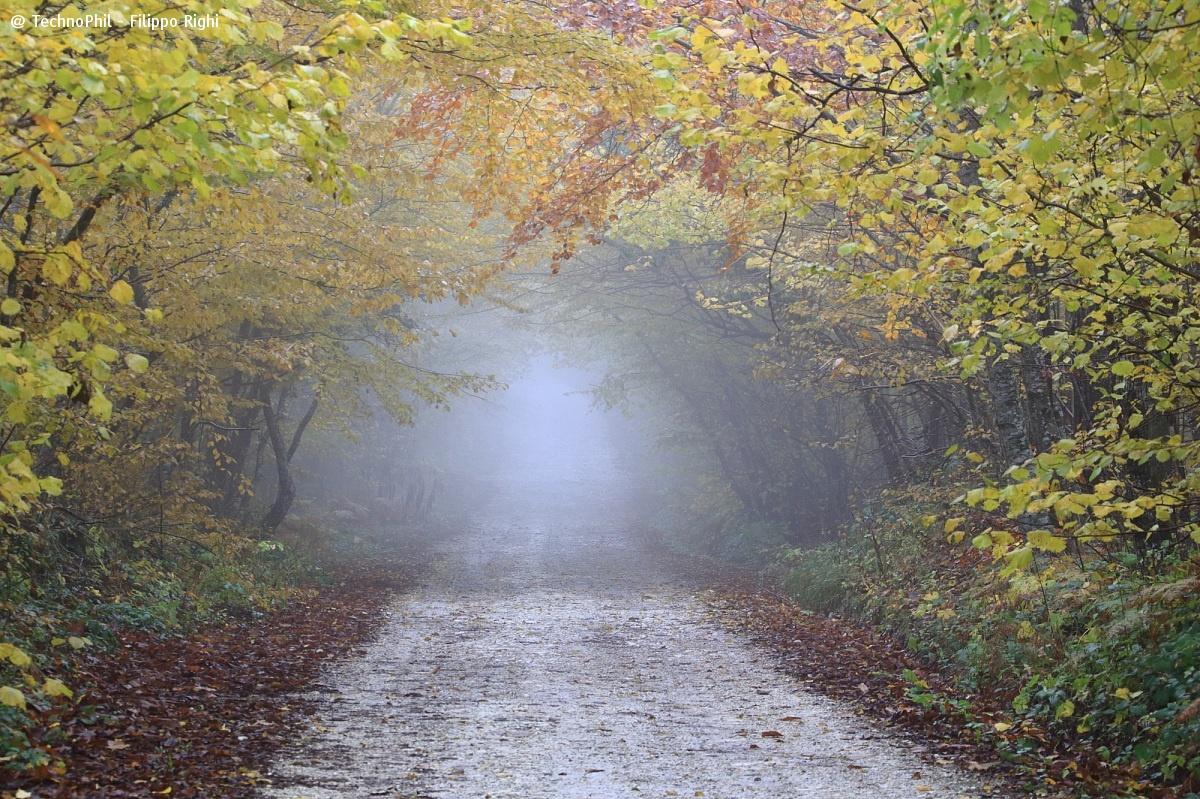 Autumn street!...