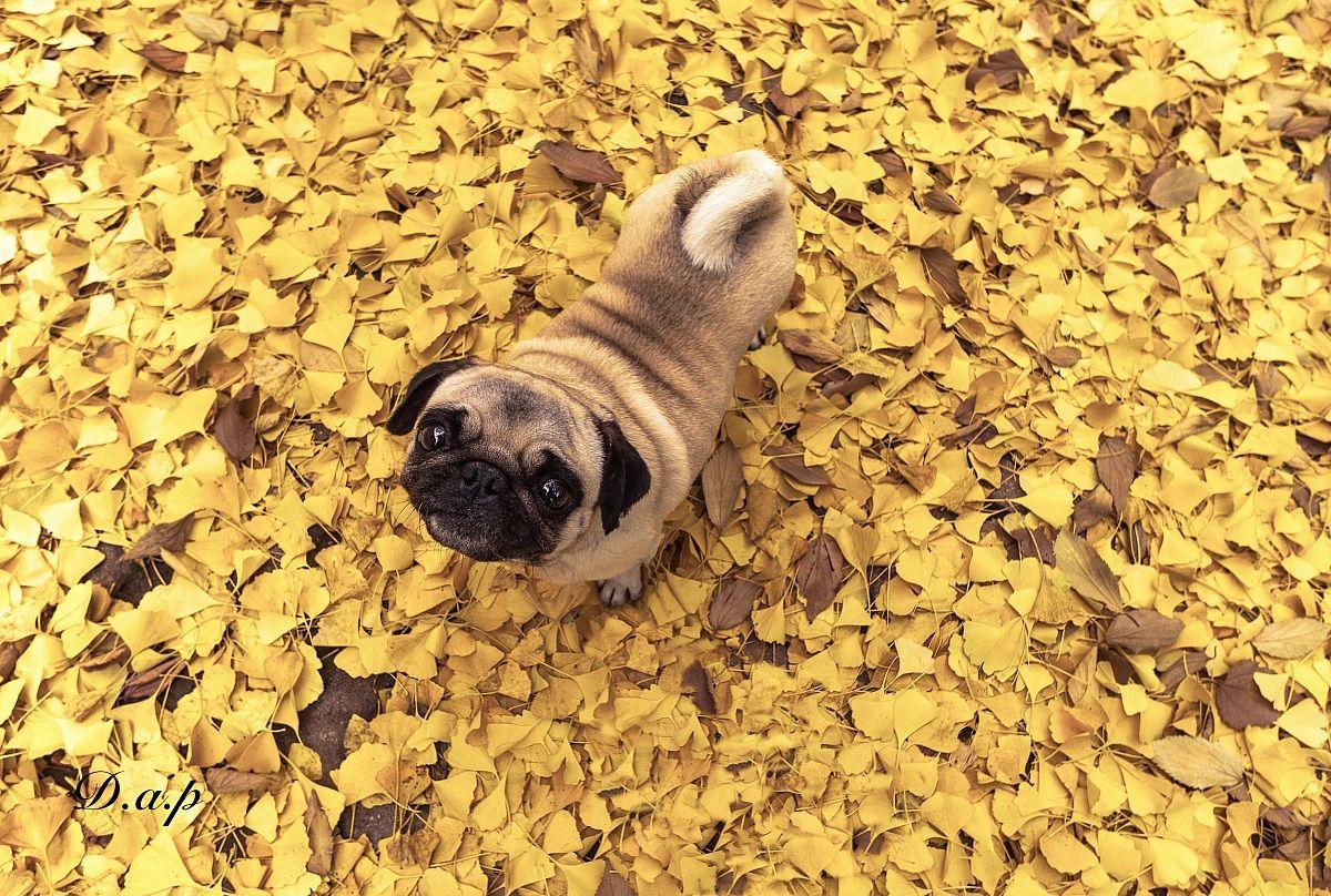 But it is already autumn ??? '...