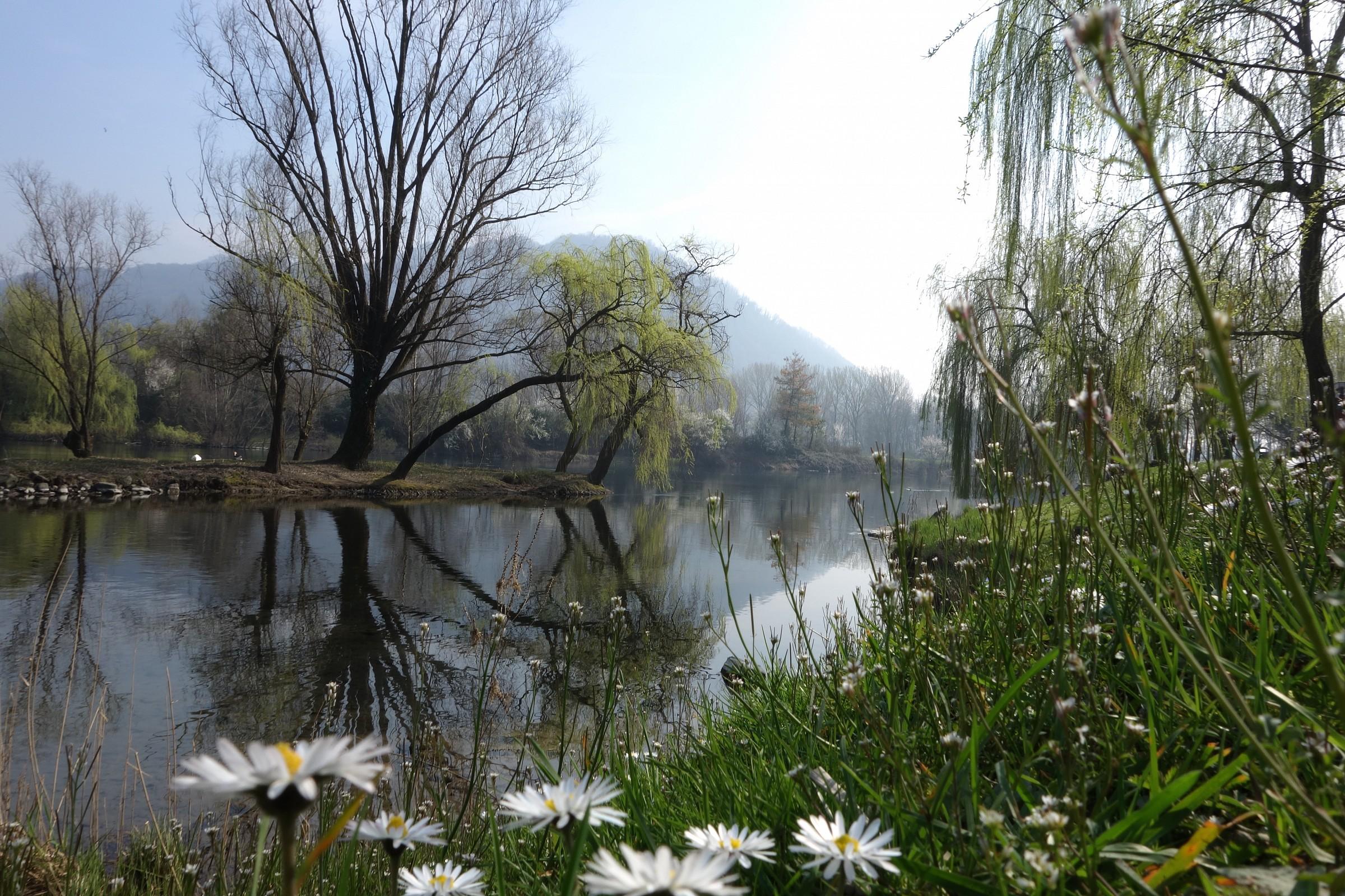 Isolotto di Brivio, inizio di primavera...