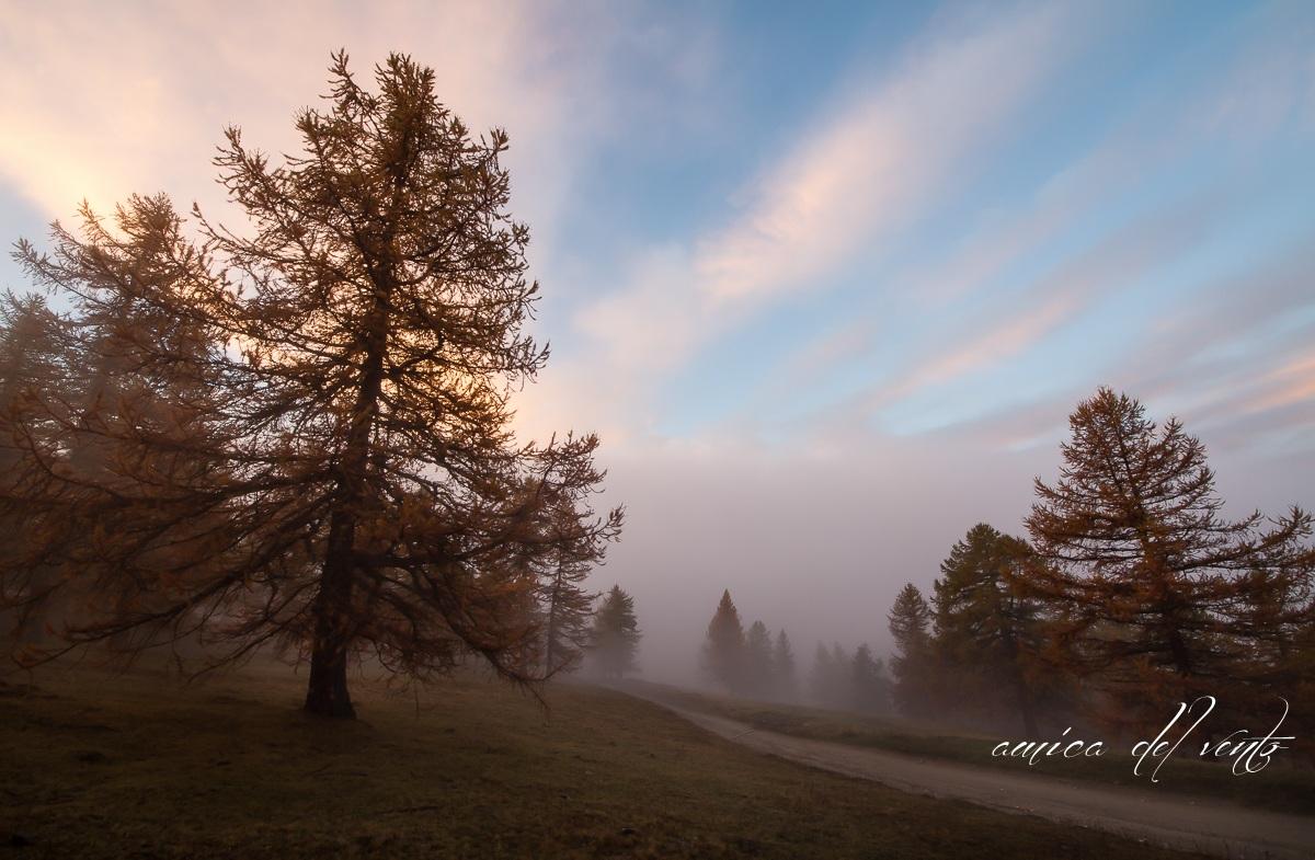 harmonies fog...