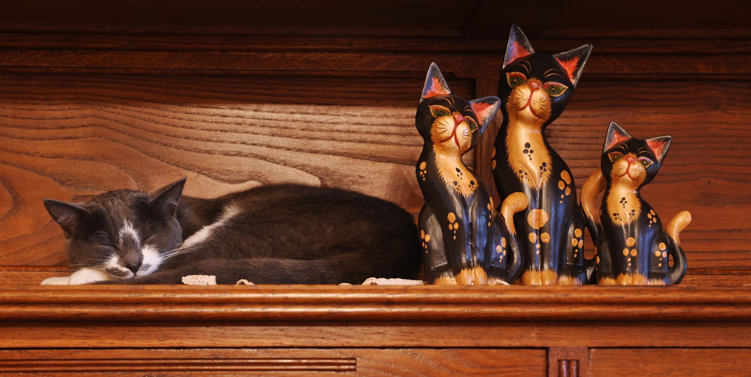 Orion cat sleepyhead...