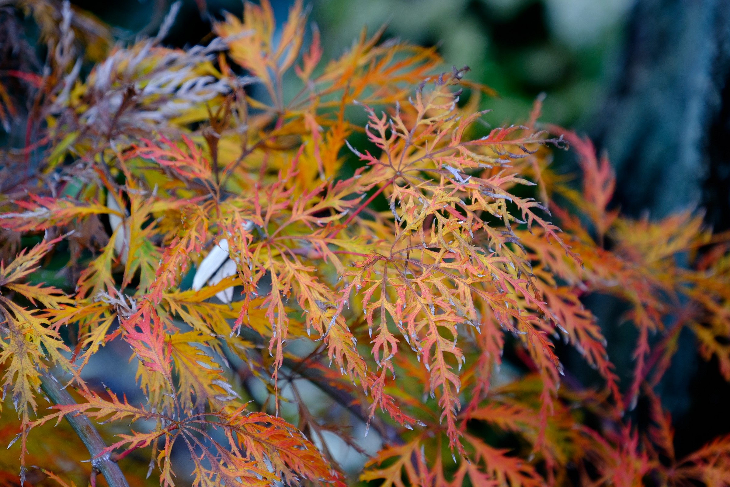 Autumn 05...