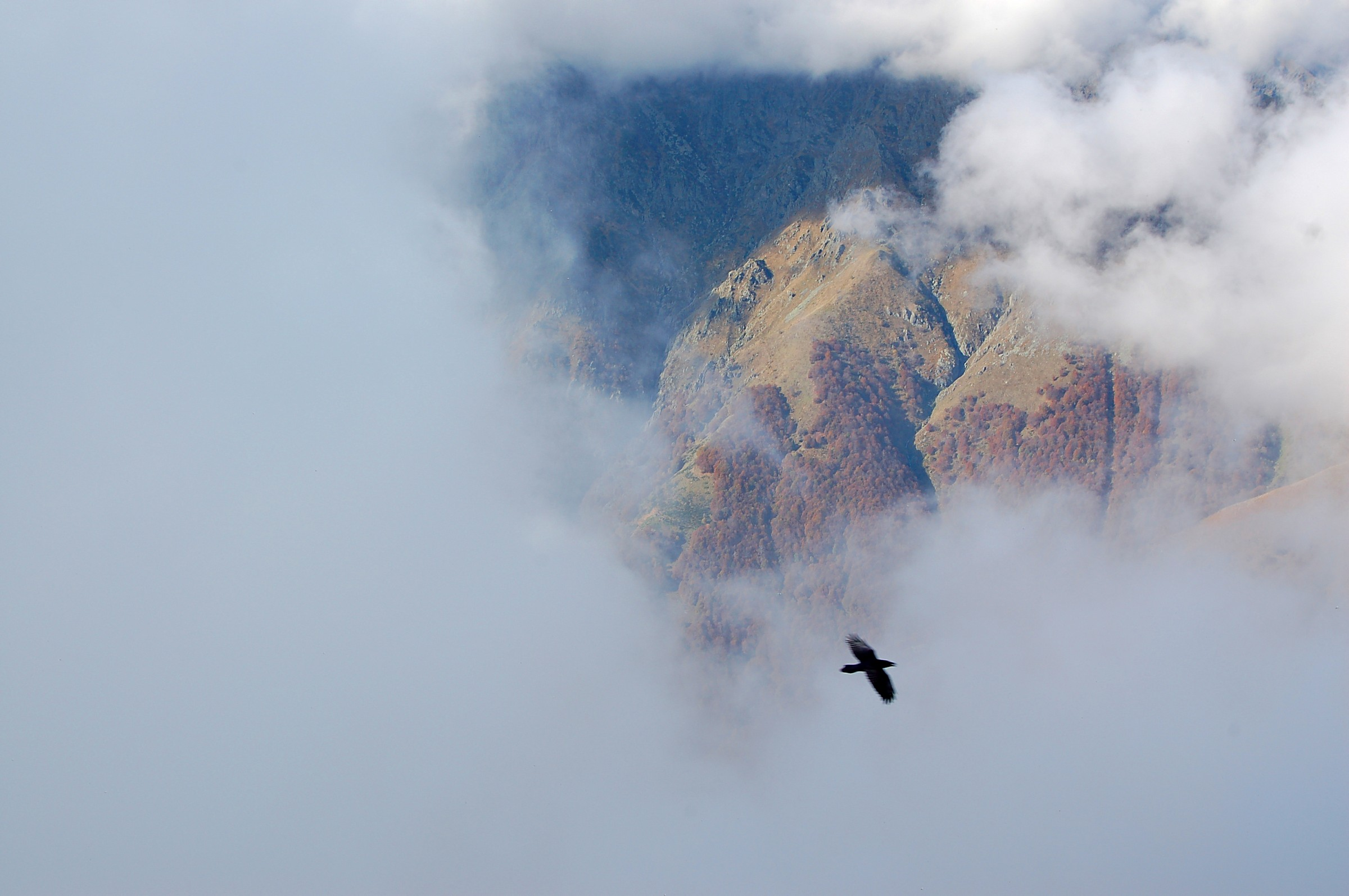 Parco Nazionale Val Grande_corvo imperiale ambientato...