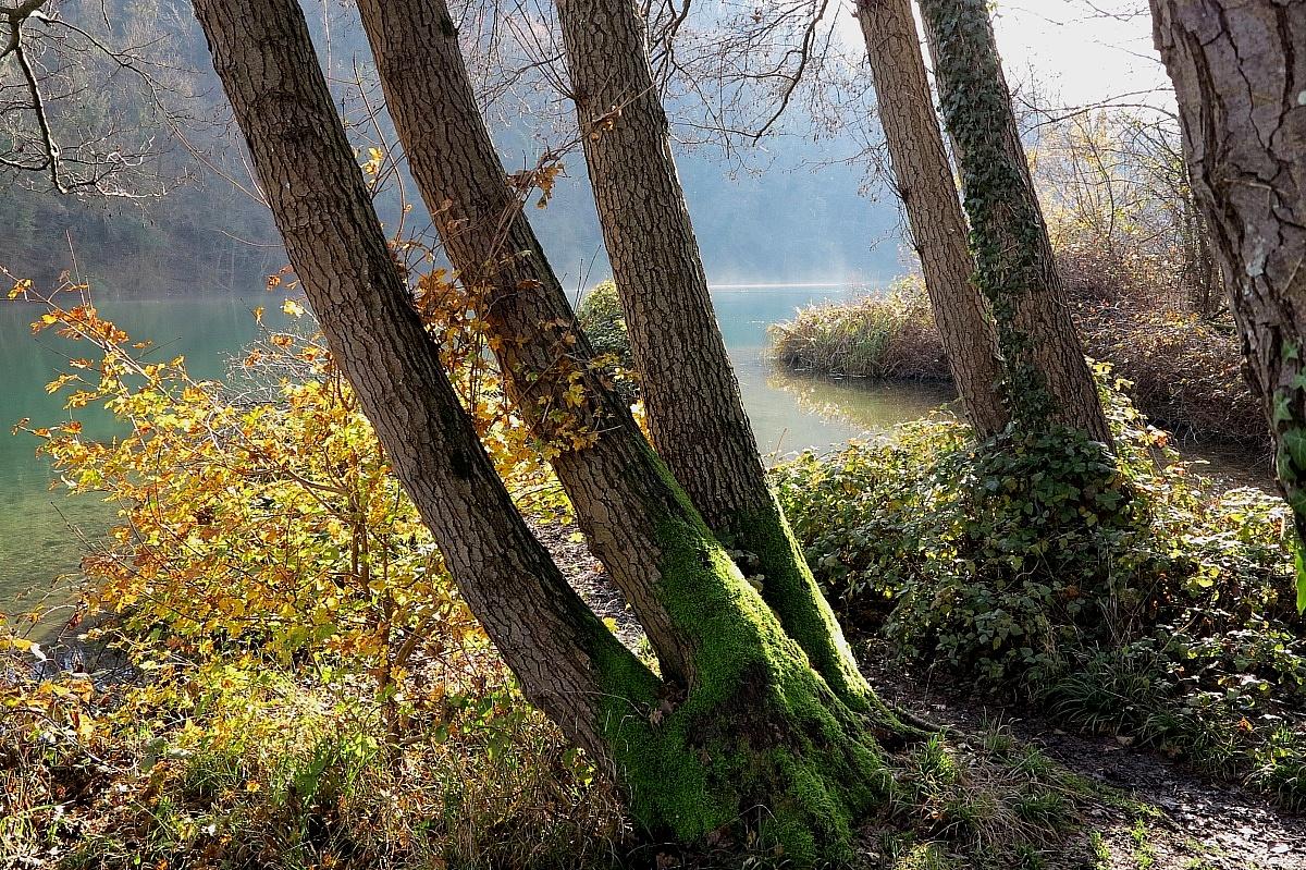 brume autunnali sul fiume...