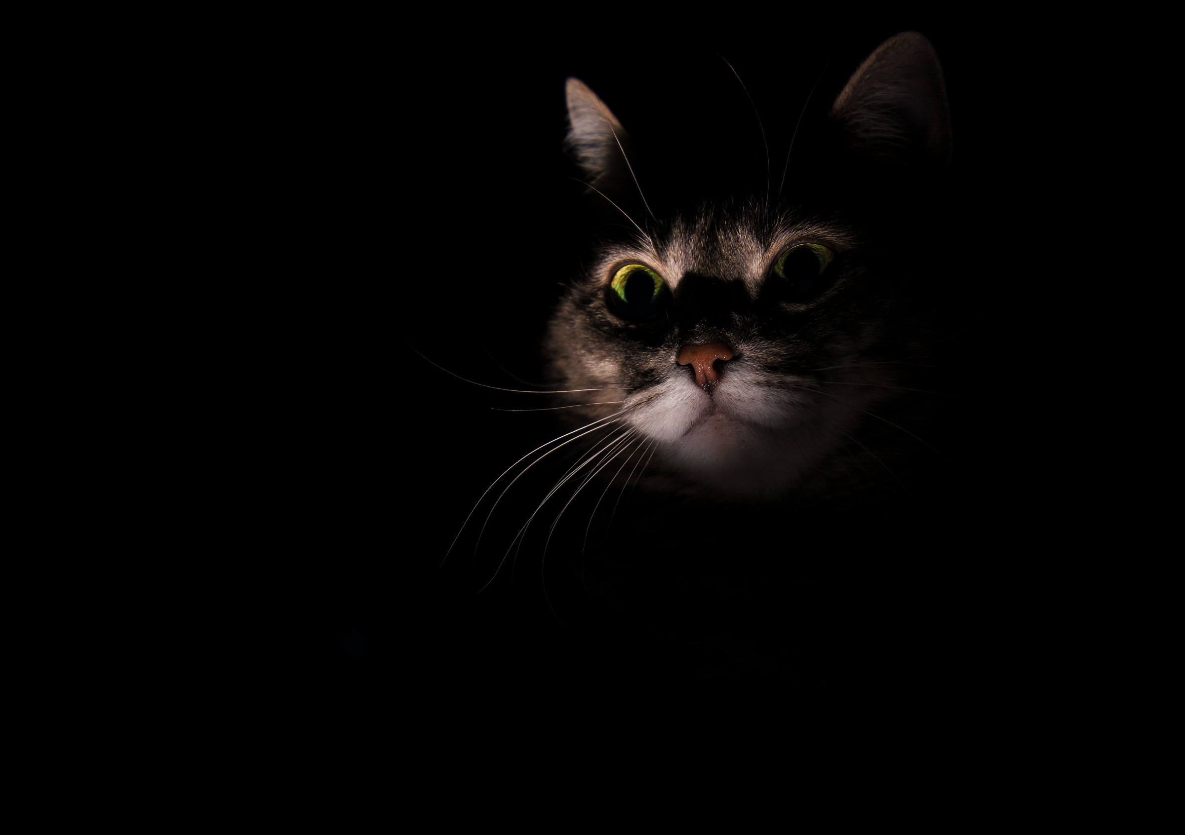 The Cat Into The Darkness!...