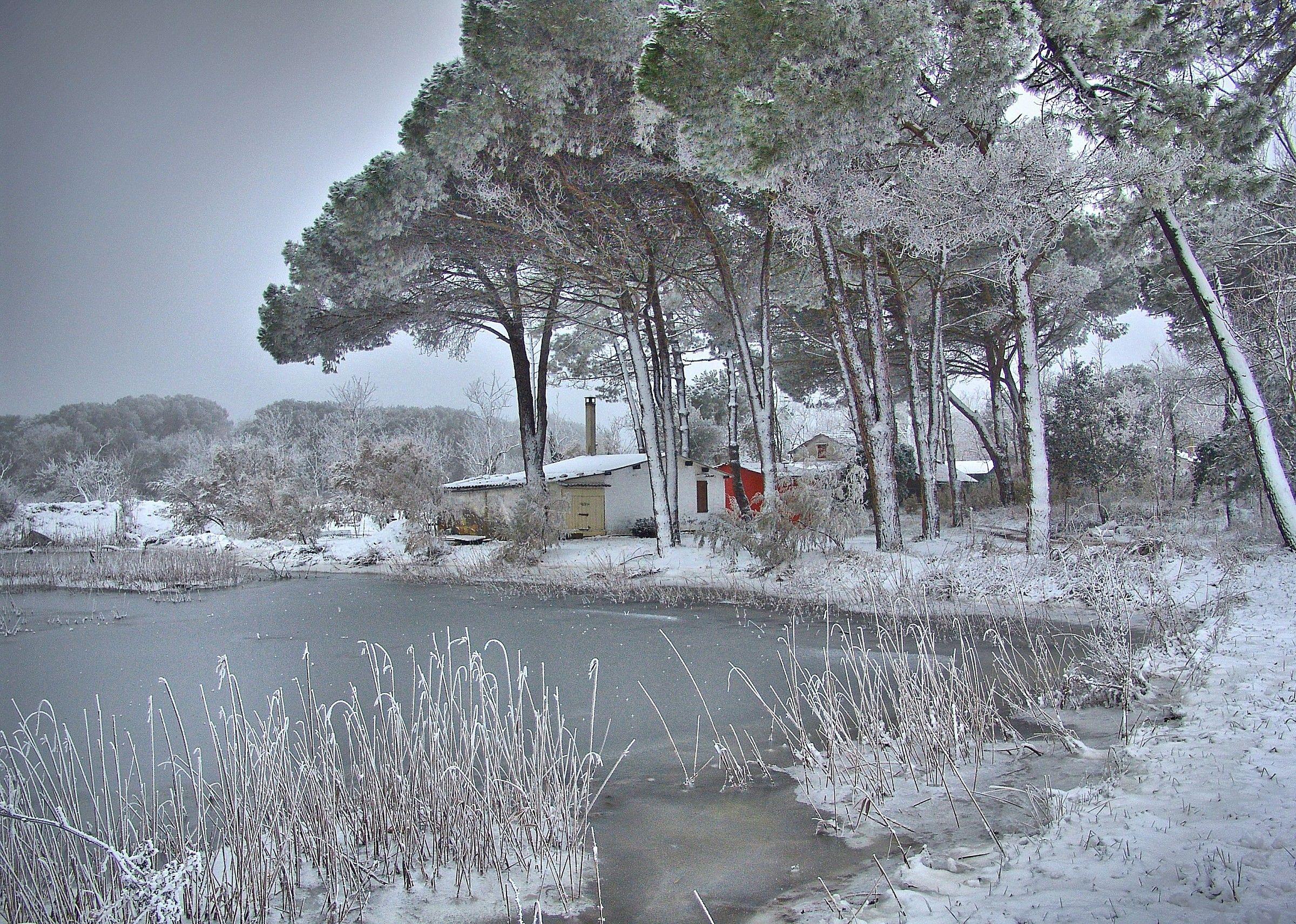 Pineta frost...