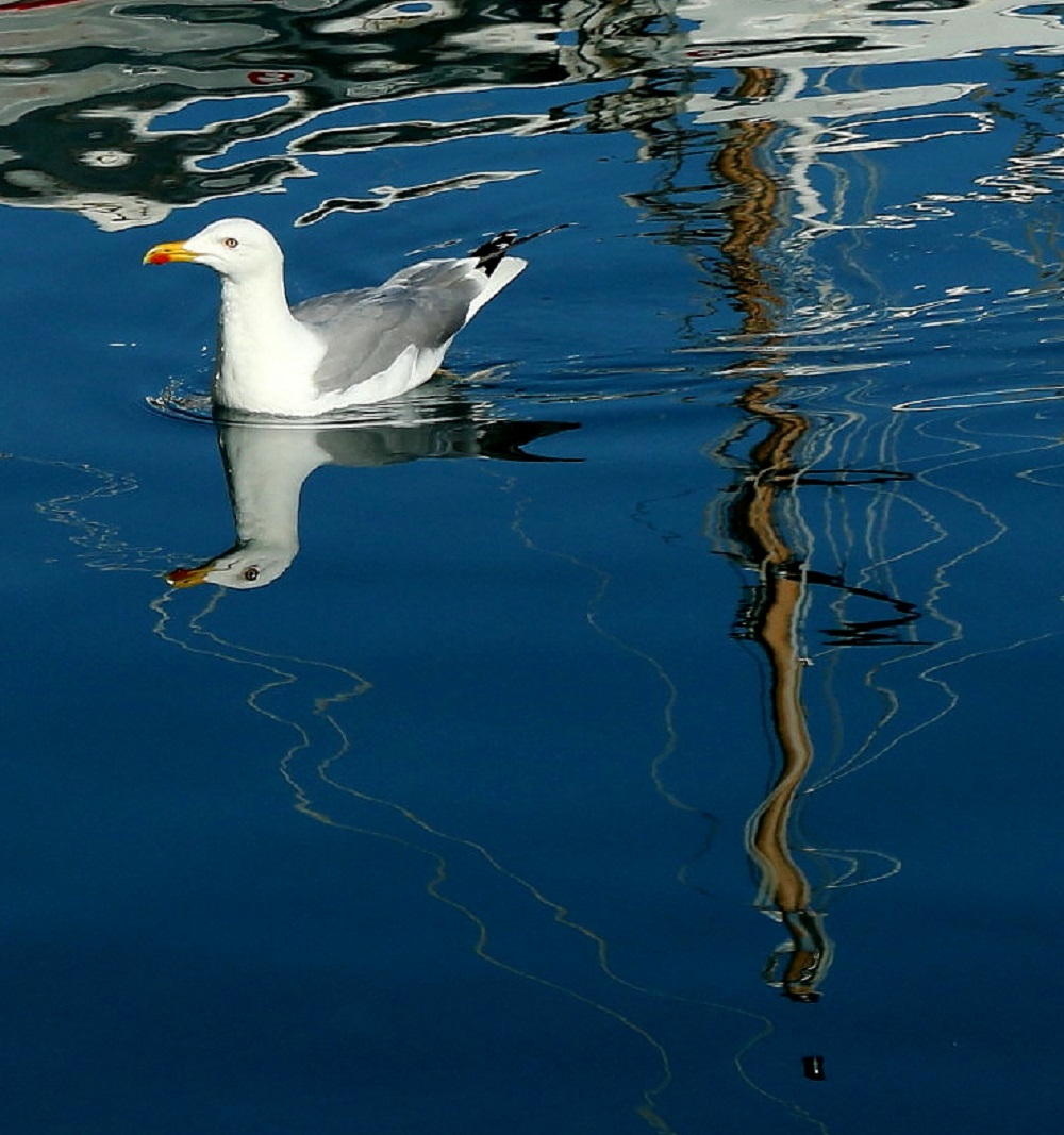reflections in water...