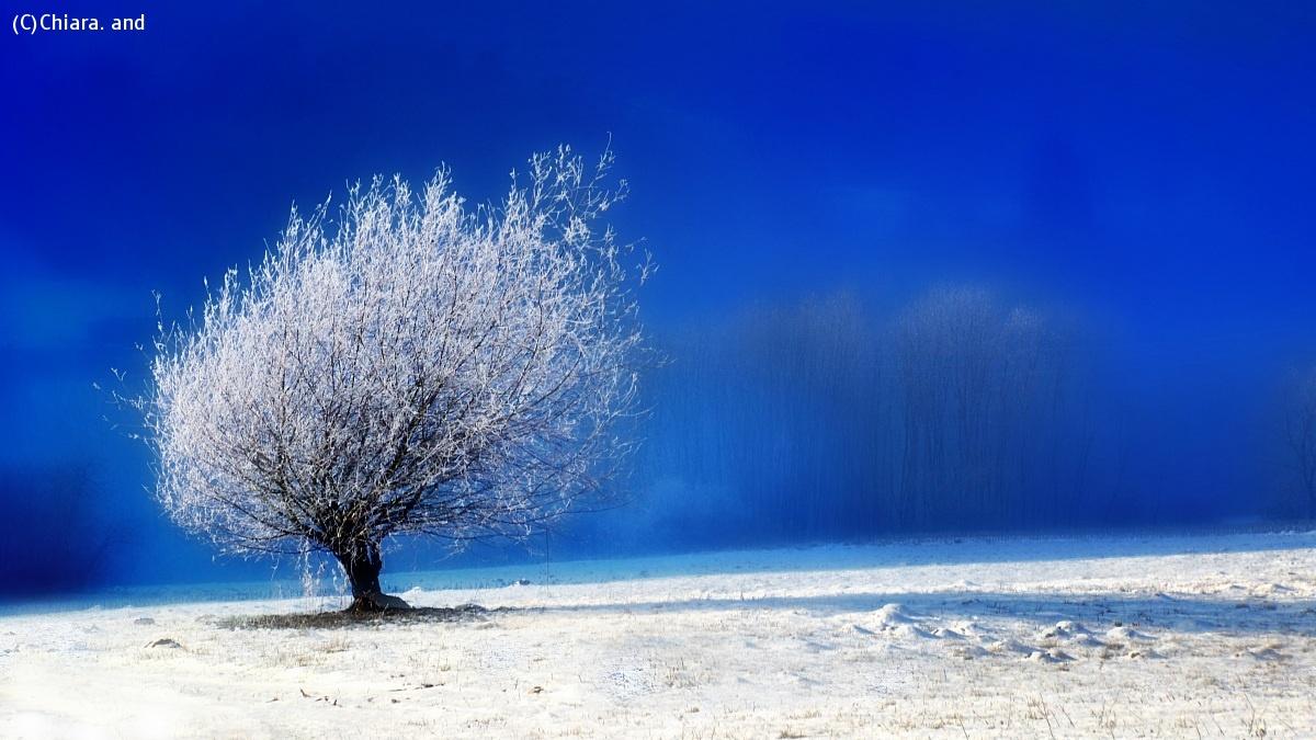 Waiting for the new year ..... Auguriiiiiiiii !!!!!!!...