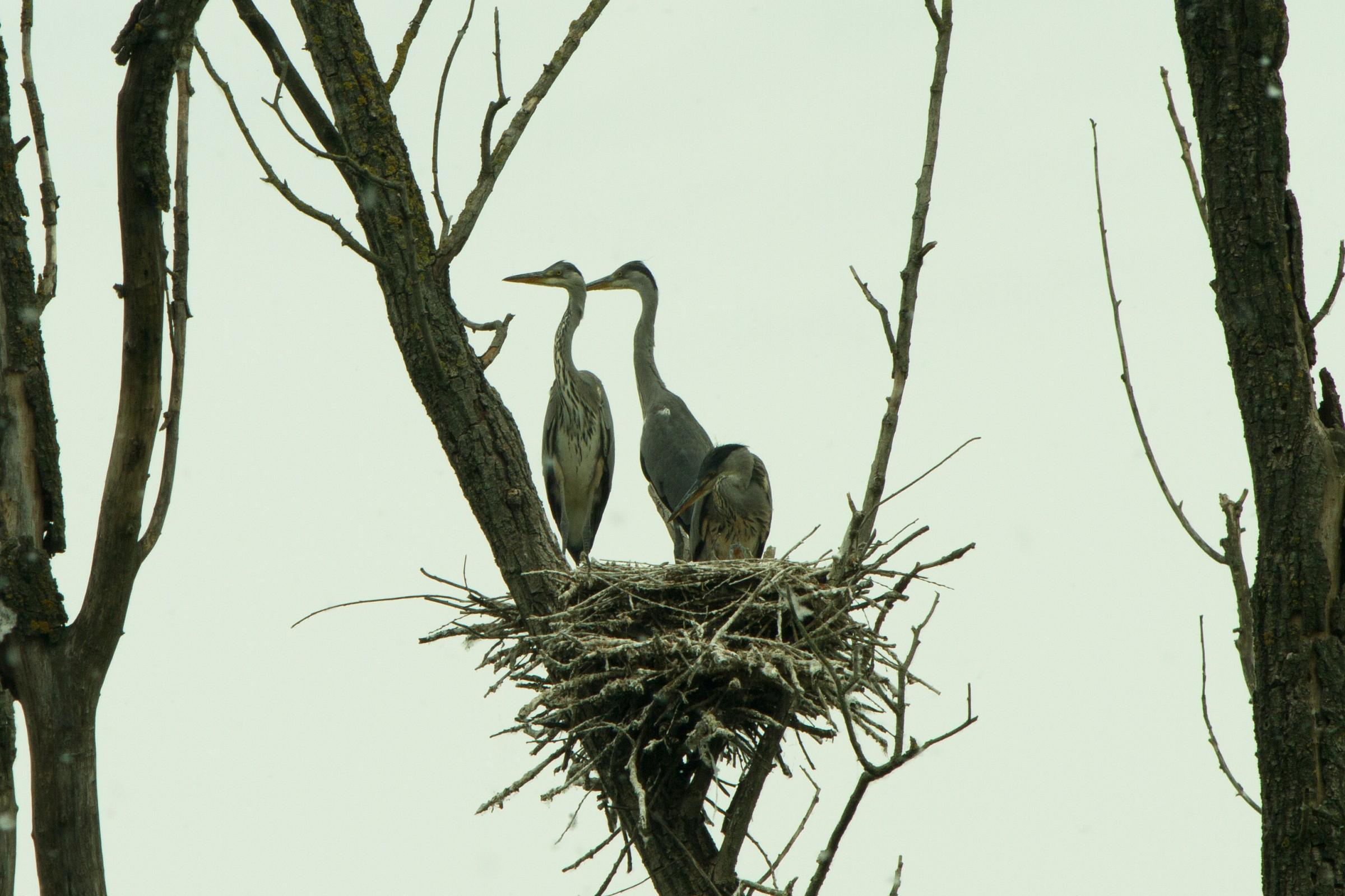 Herons Nest...