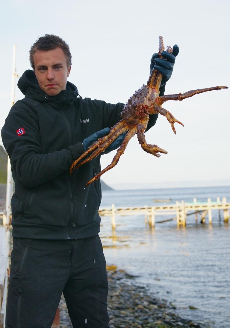 king crab...