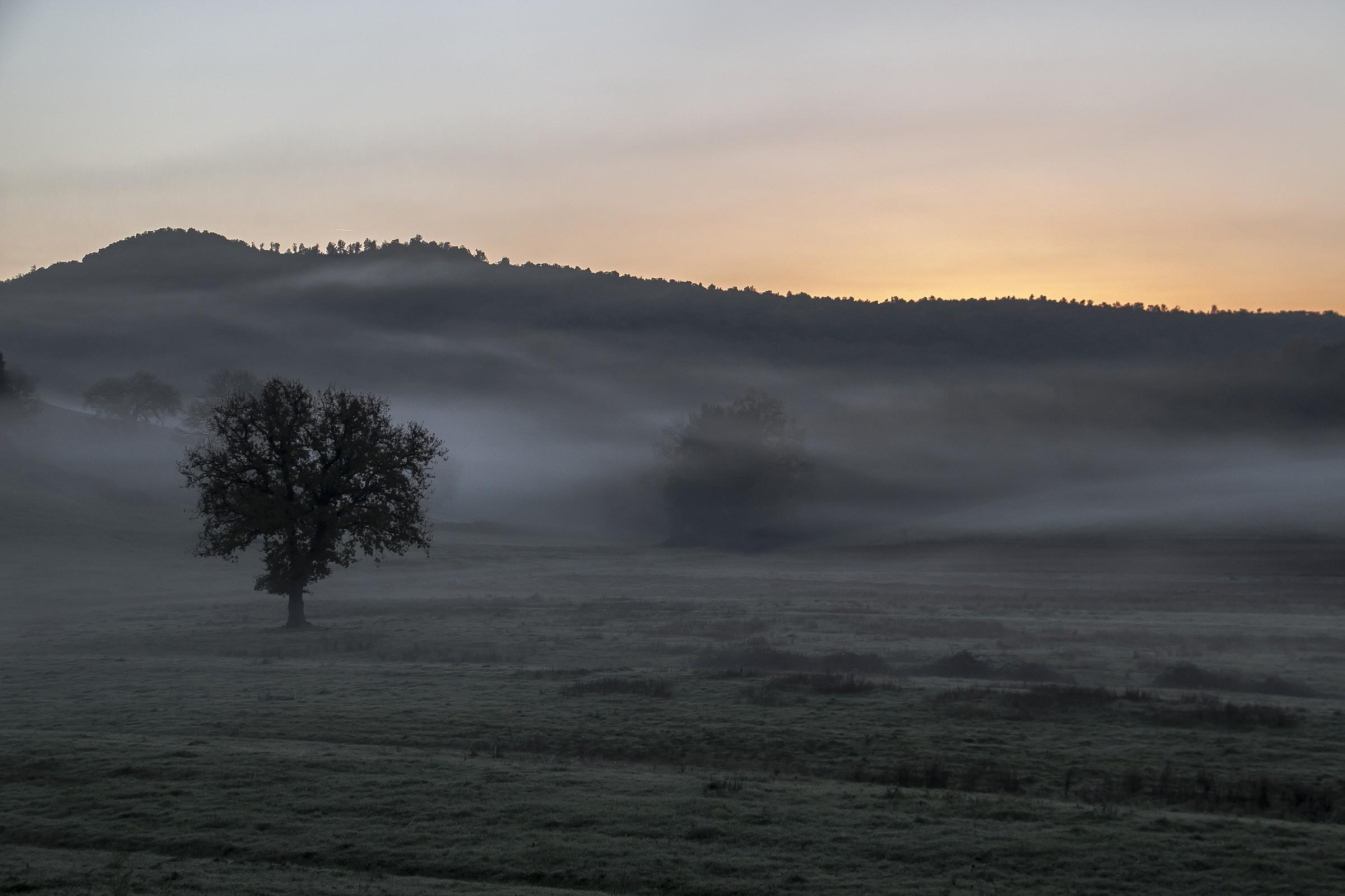 Awakening with fog...