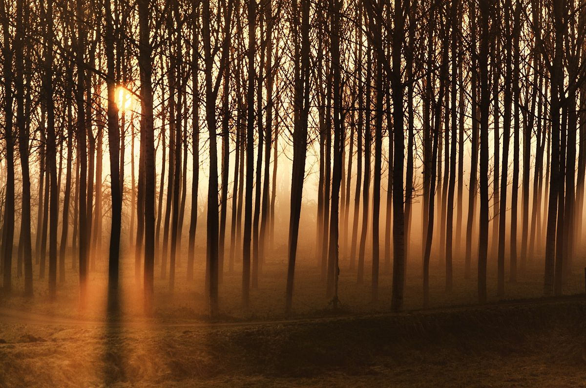 Dawn in the woods...