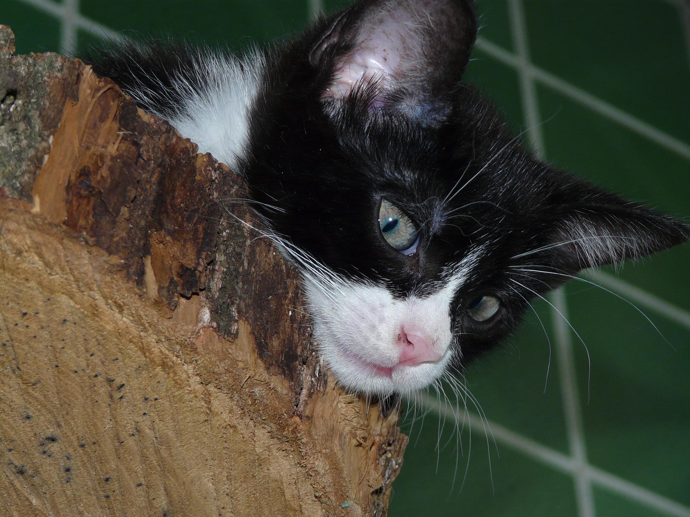 Gaia sul tronco...
