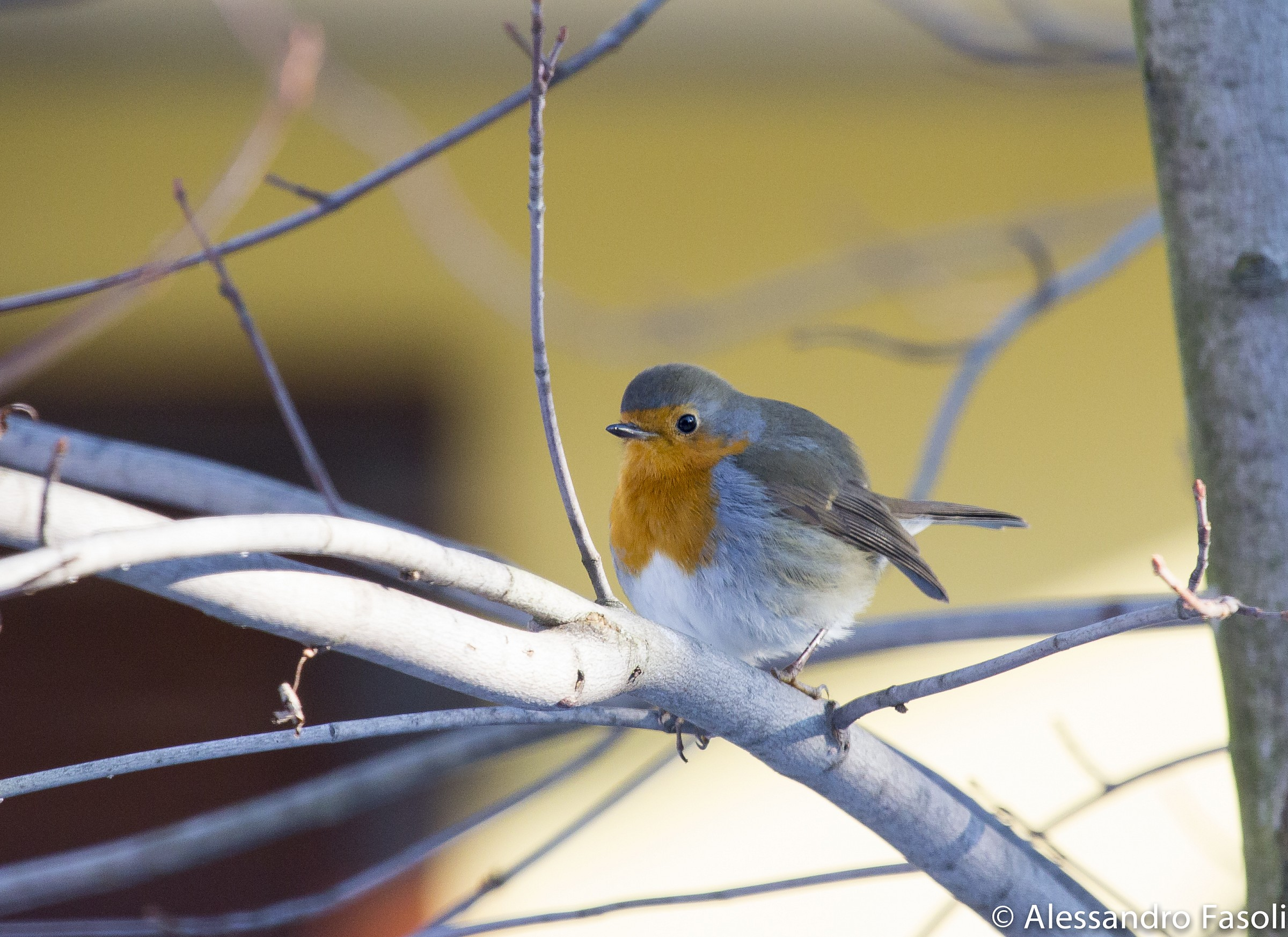 Robin in the Garden of House...